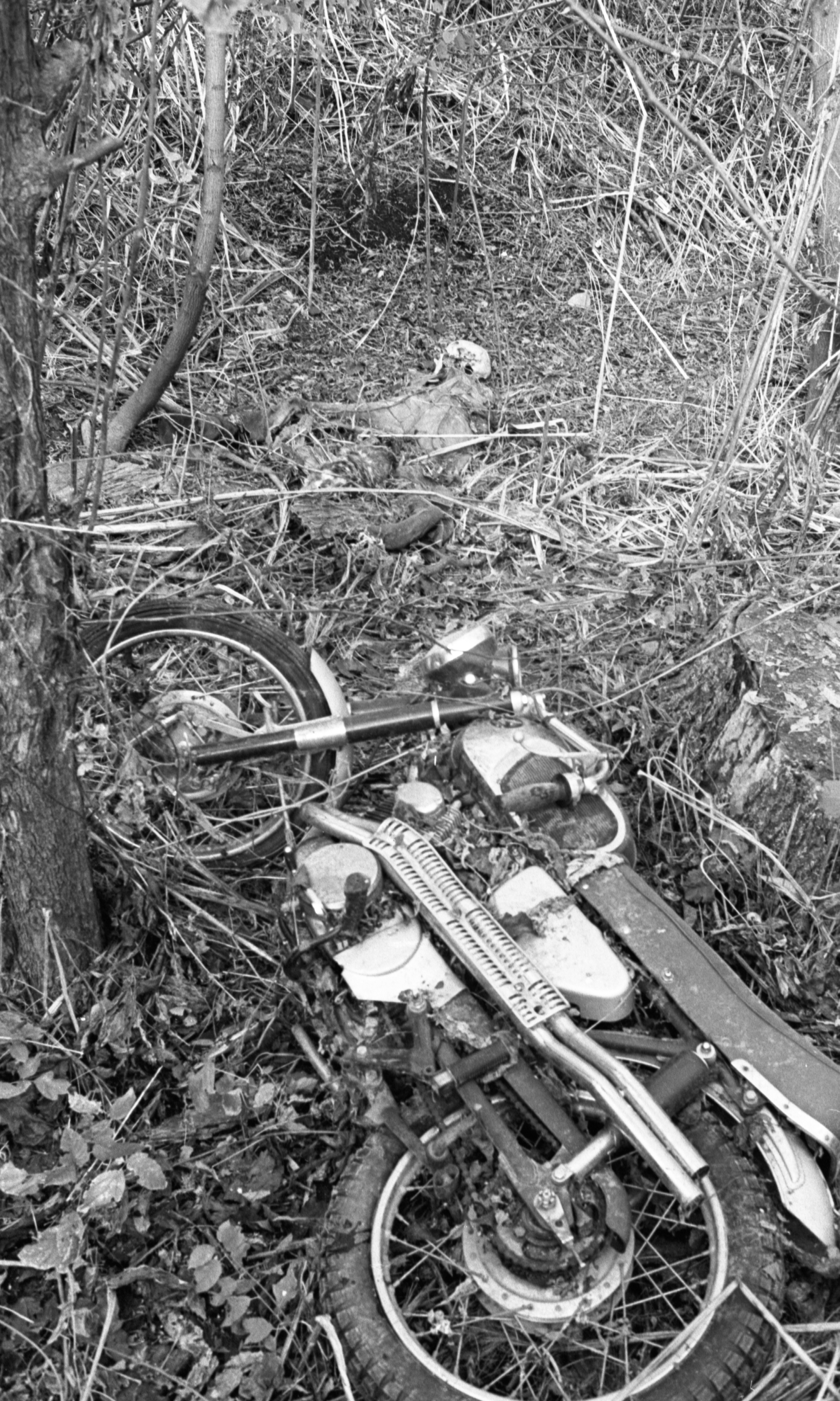 Motorcycle And Skeleton Discovered In Woods, October 1968 image