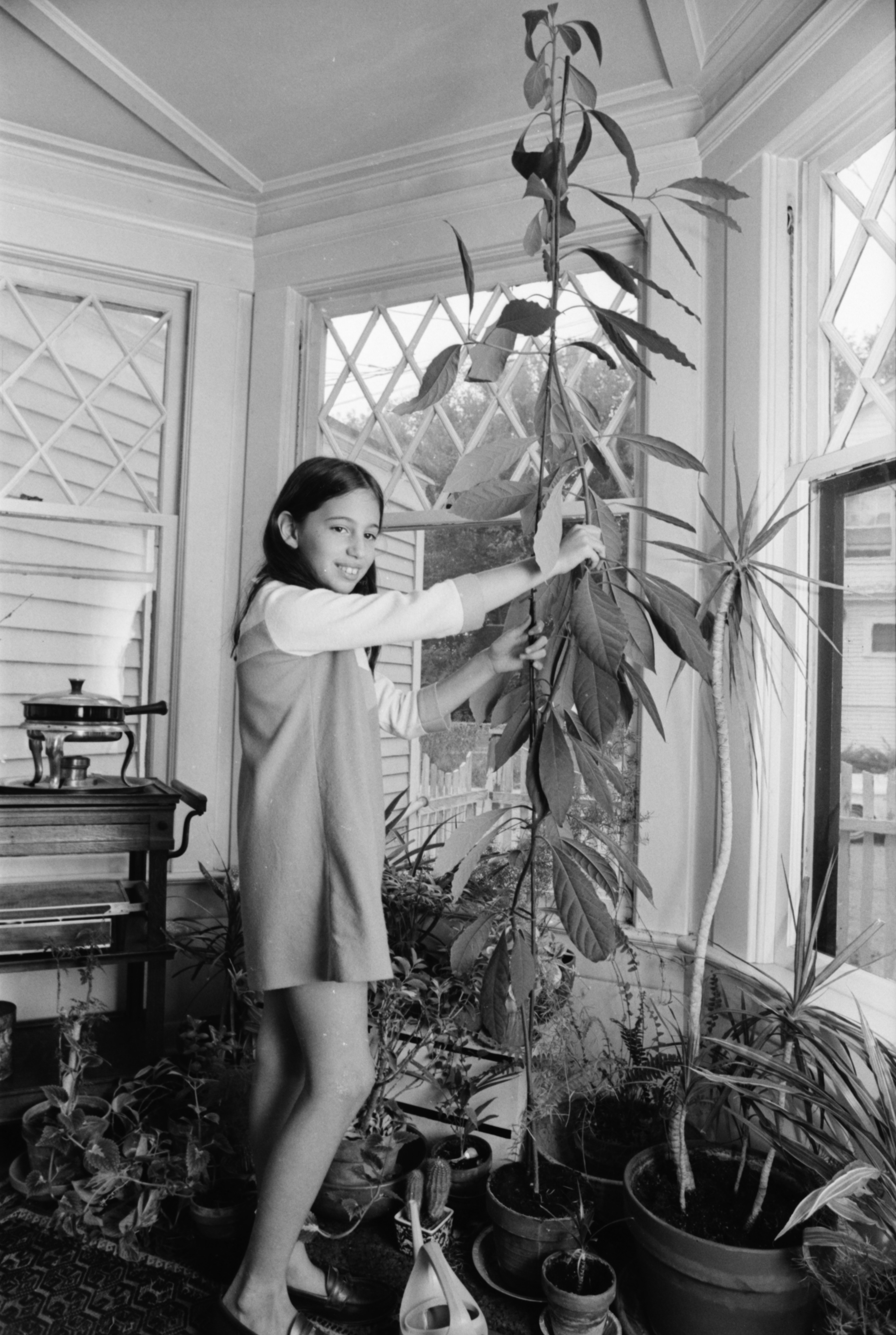 Melissa Berlin Grows Avocado Plant From Seed, October 1969 image