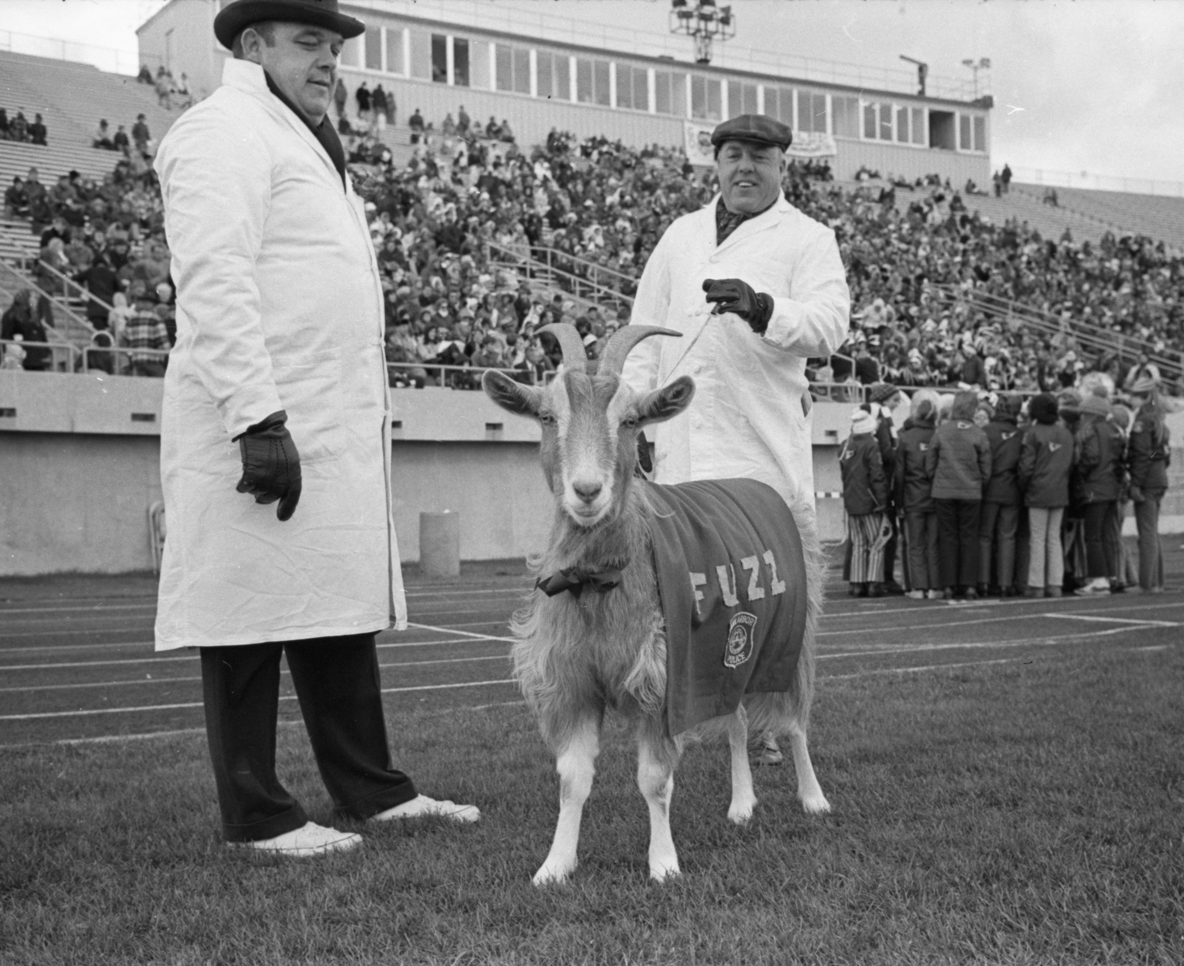 Ann Arbor Police Mascot 'Fuzz' Watches Annual Pig Bowl Game, November 1971 image