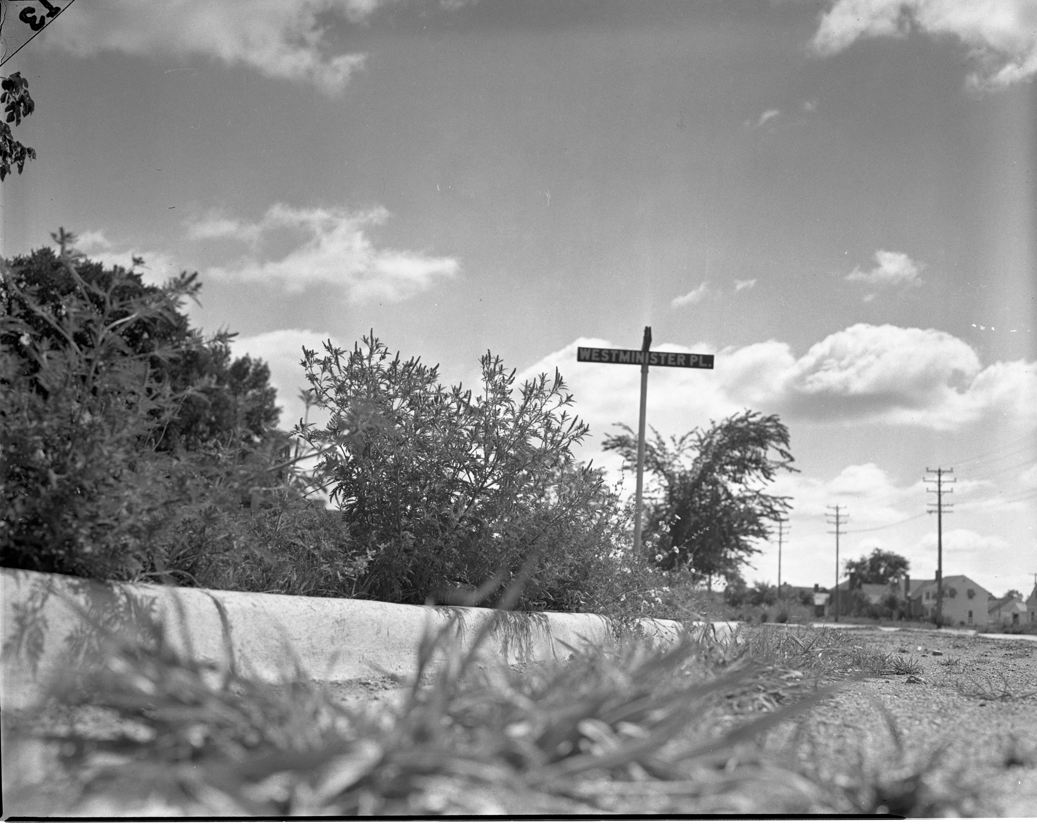 Ragweed Grows Plentiful At Intersection of Stadium Blvd and Westminster Place, August 1941 image