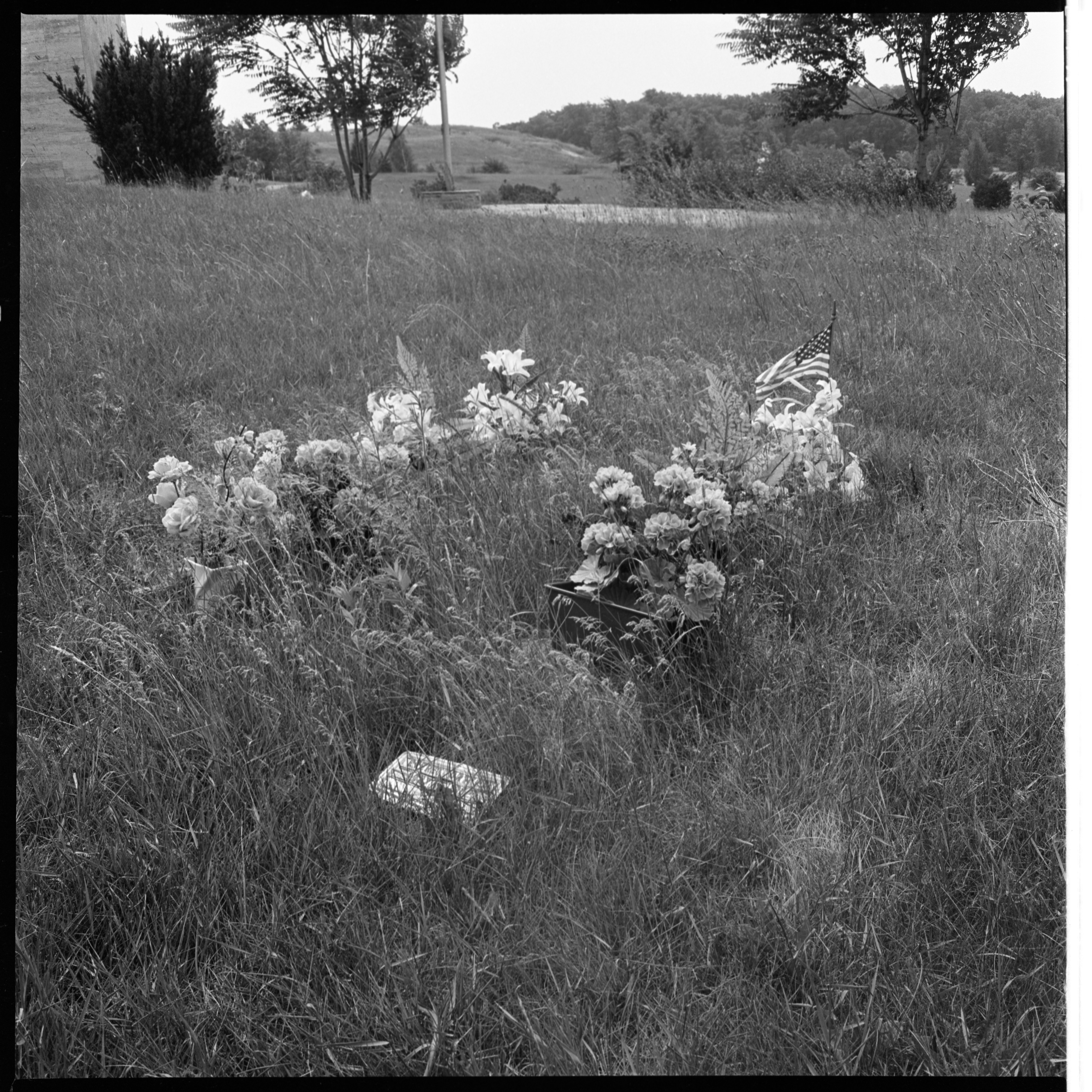 Grave In Arborcrest Cemetery Obscured By Weeds, July 1966 image