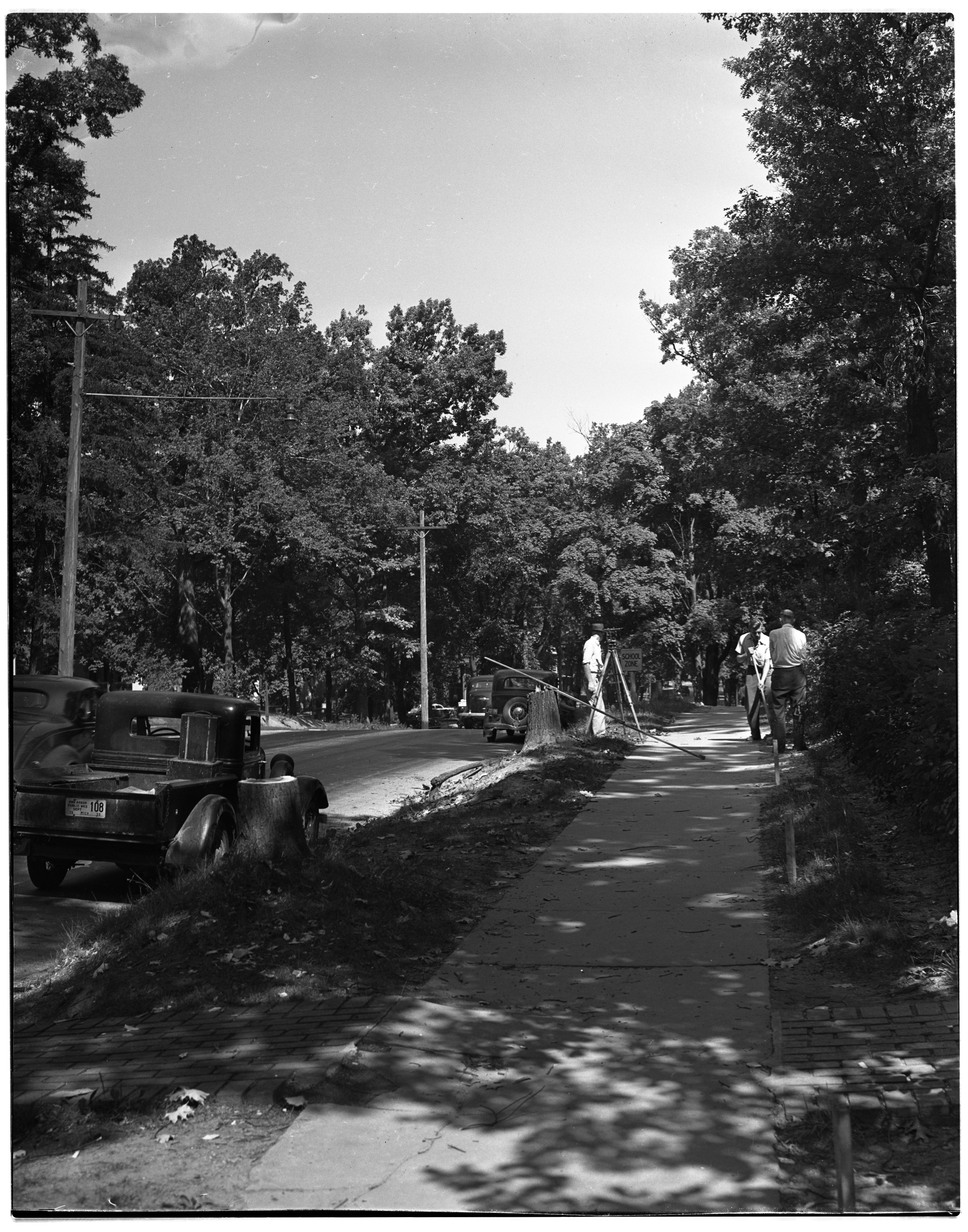 Tree Cutting on Washtenaw Ave. image
