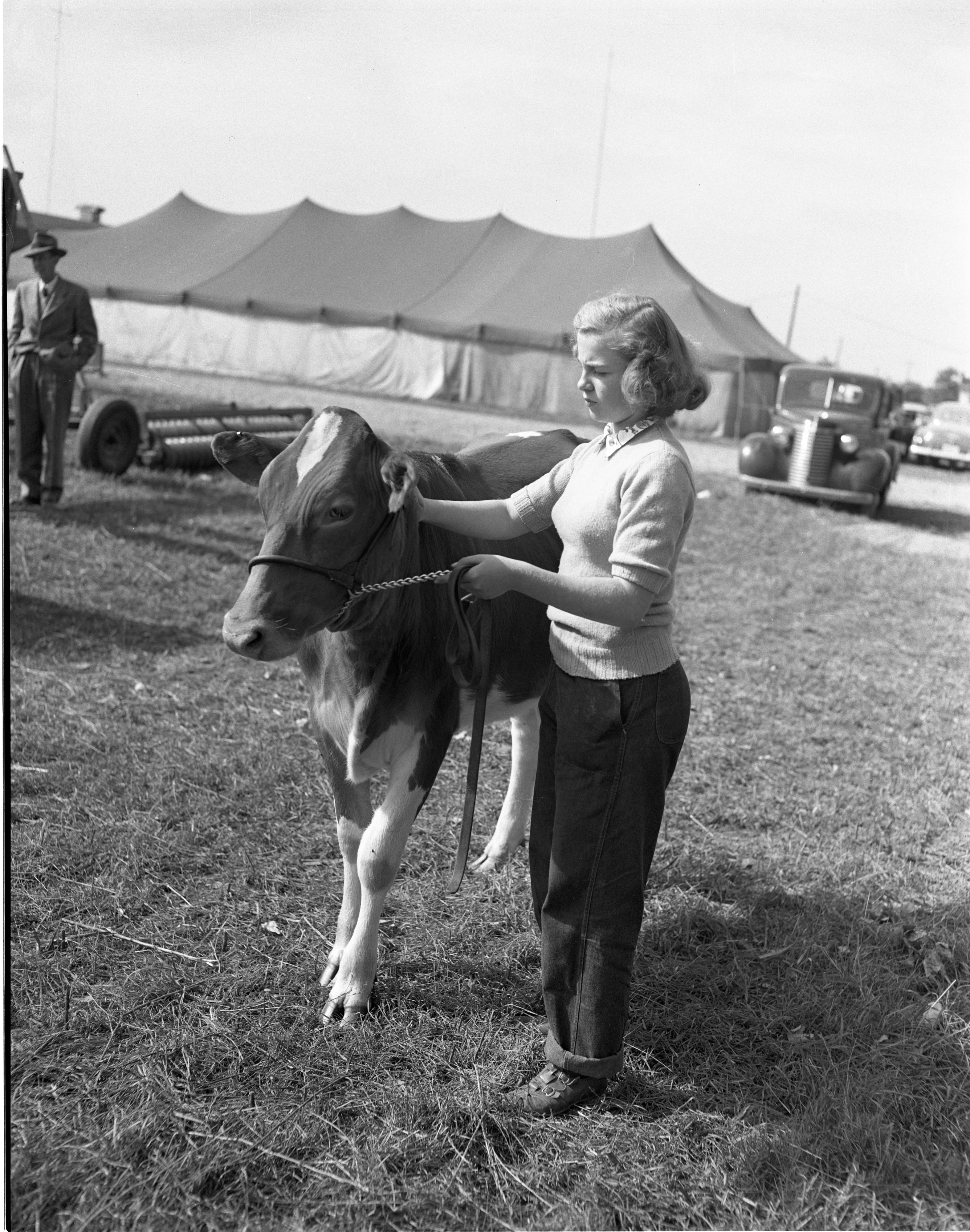 Audrey Haab With Her Cow At The Chelsea Community Fair, October 1950 image