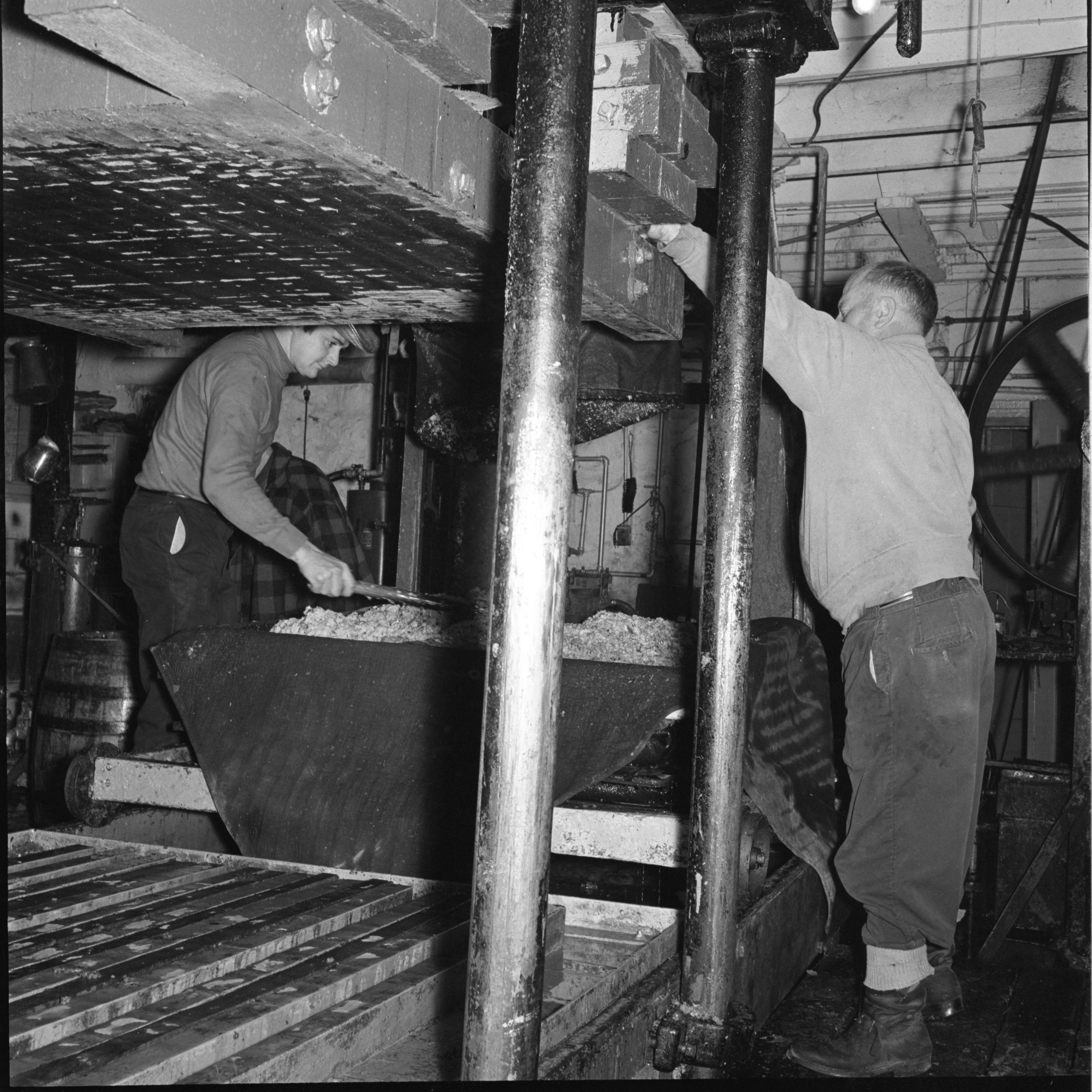 Preparing Apples For Pressing At The Dexter Cider Mill, November 1966 image