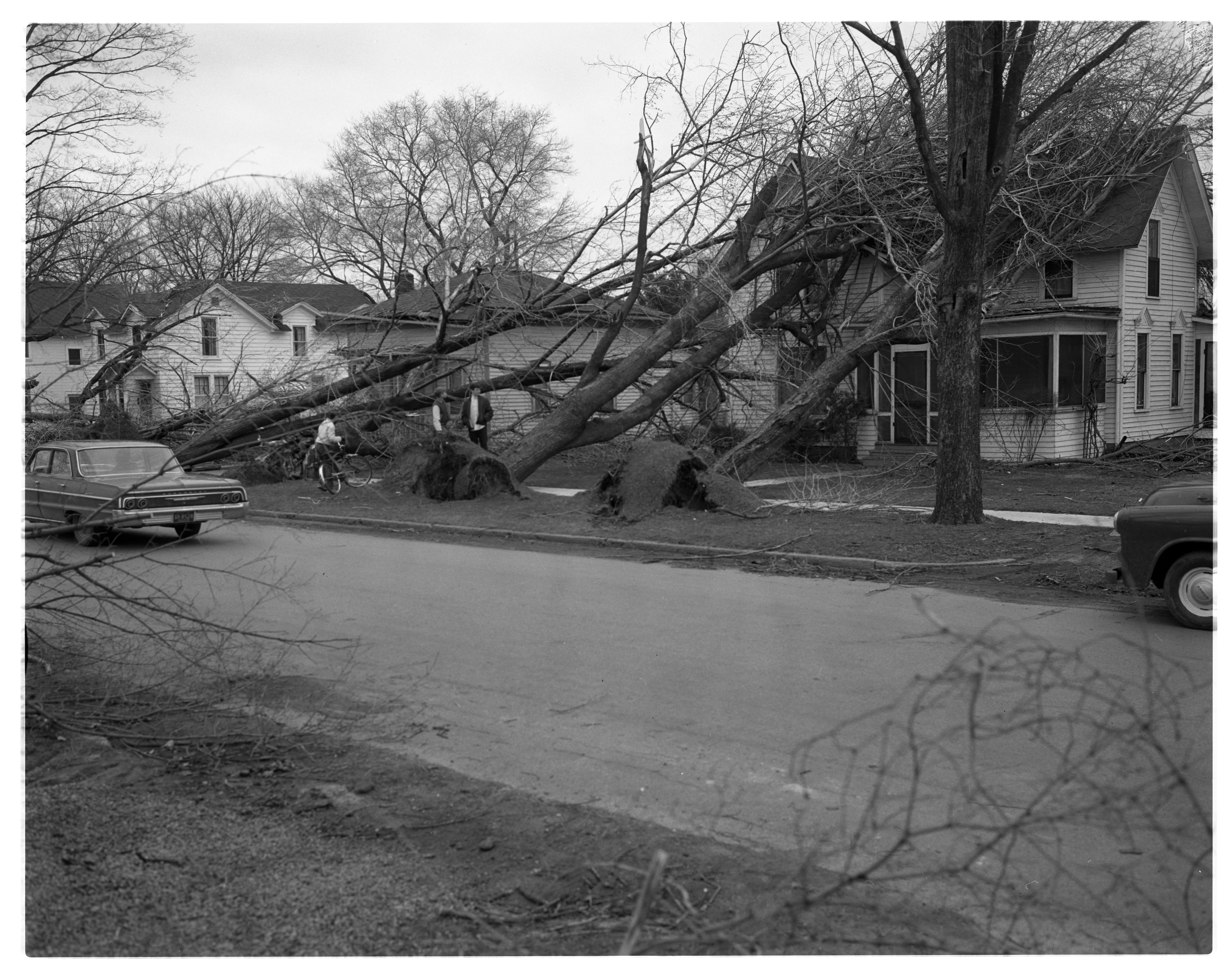 Tornado Tossed Trees On Homes in Milan, April 1965 image