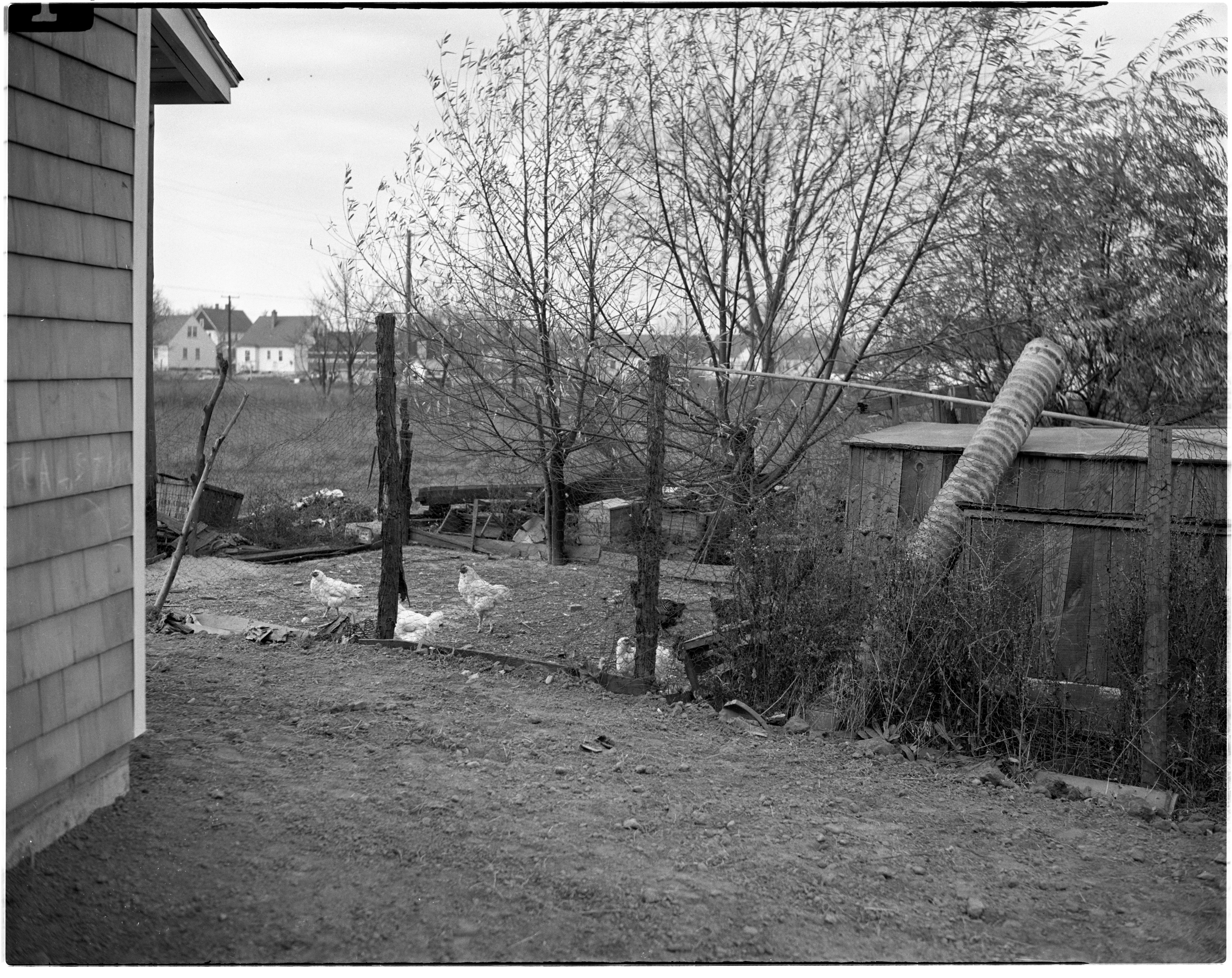 Chickens at Condemned Property in Pittsfield Village, November 1944 image