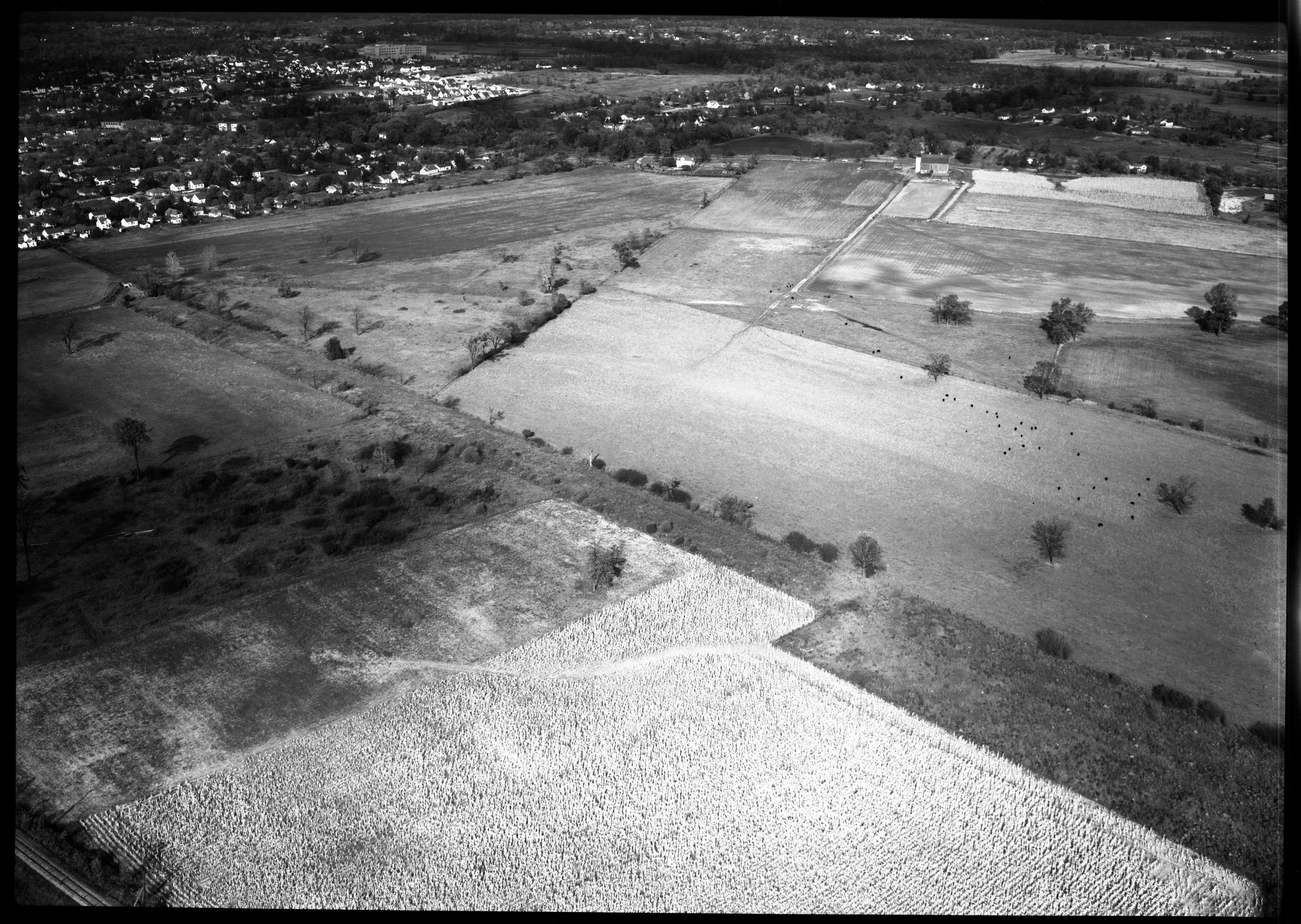 Aerial Photograph of Property North of Malborough Dr. and Packard Rd., October 1951 image