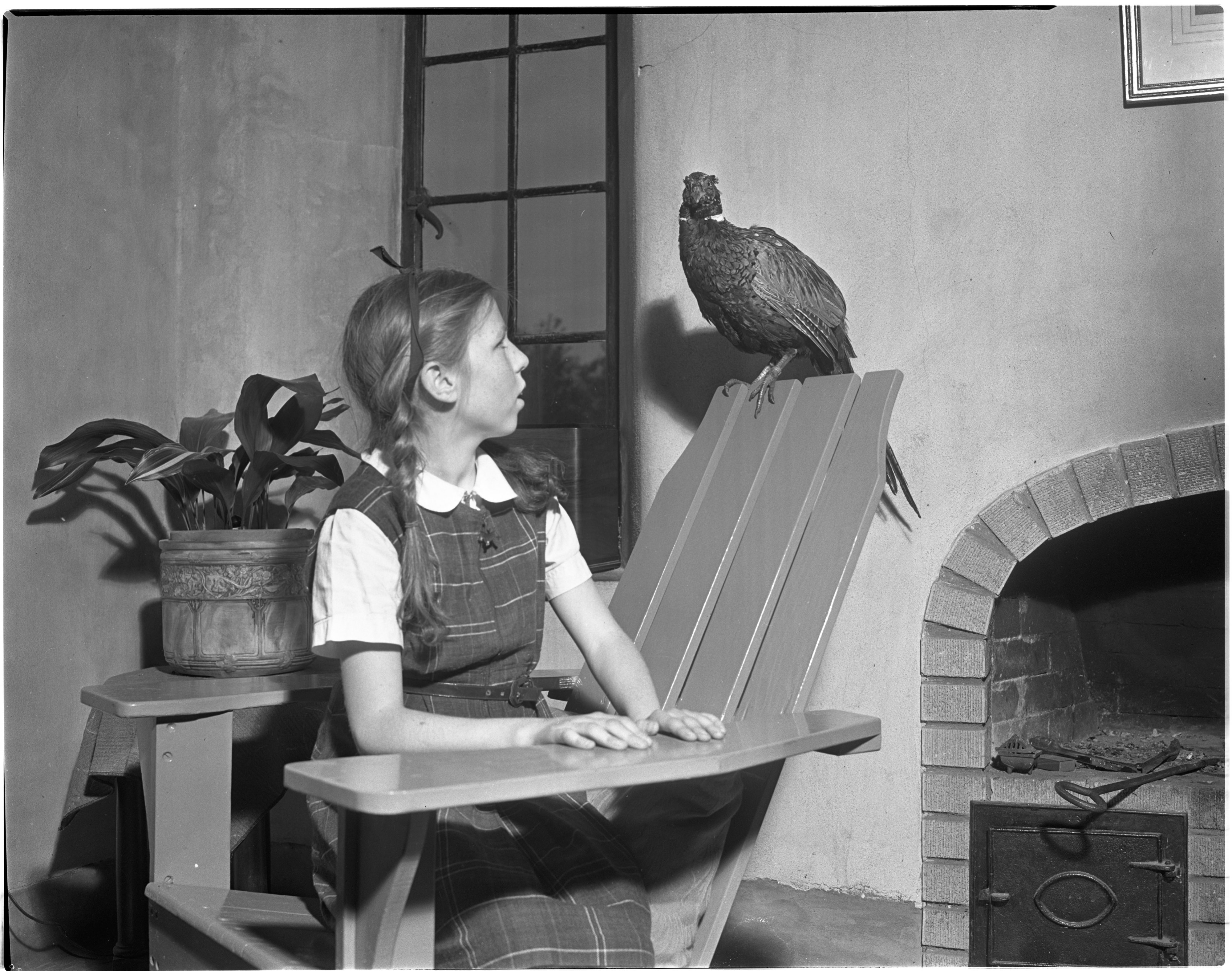 Joan Franklin and Pet Pheasant image