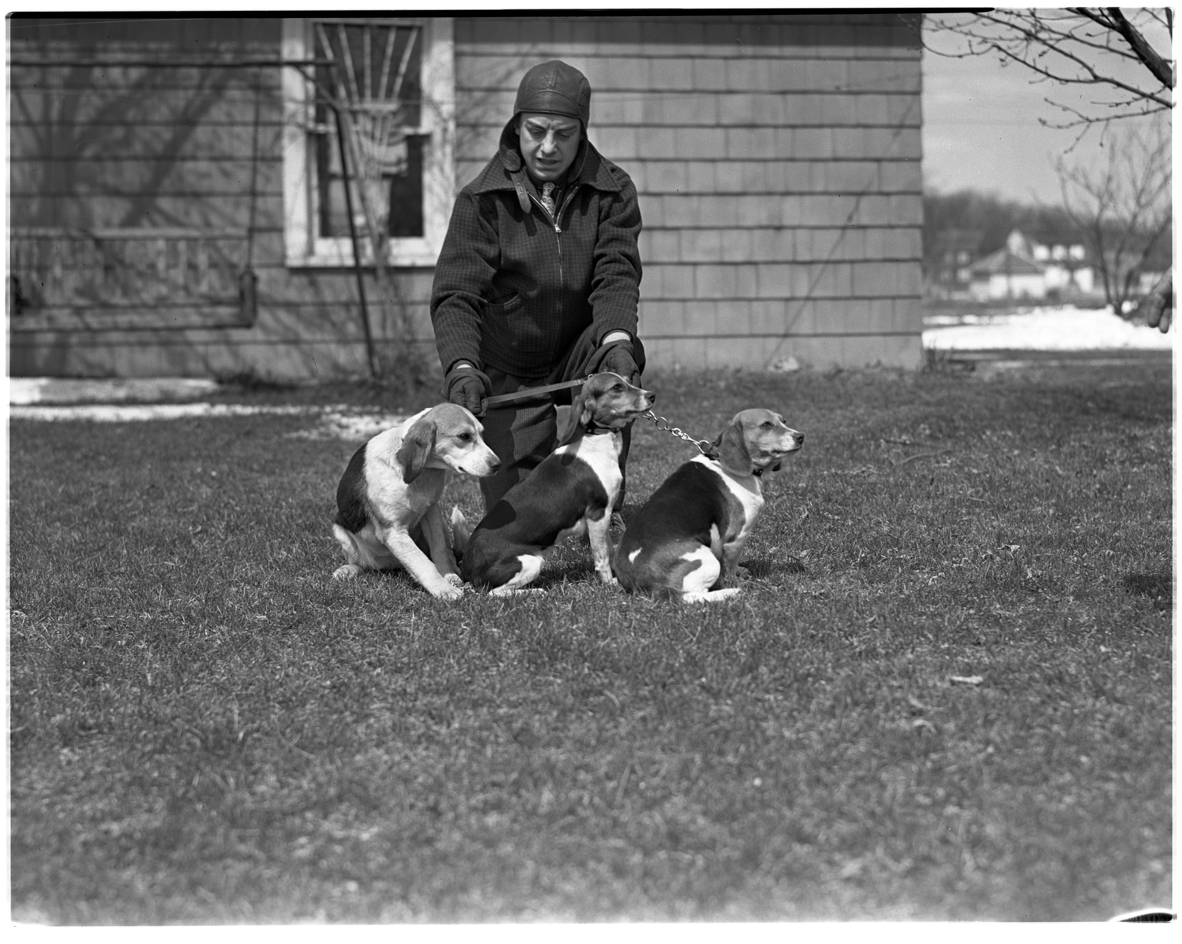 Three Beagles and Owner image
