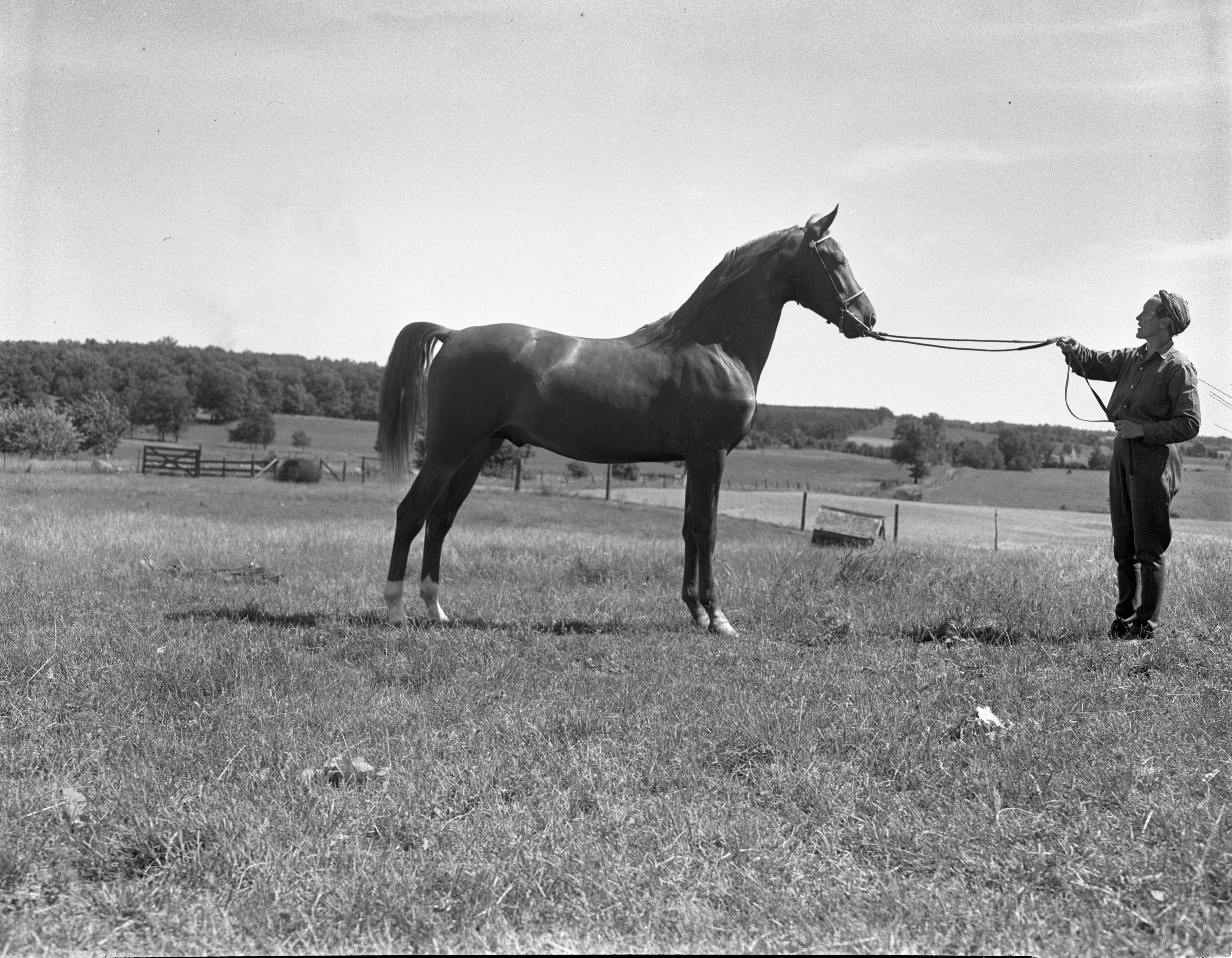 Dr. Theodore Lane's Horse, 1940 image
