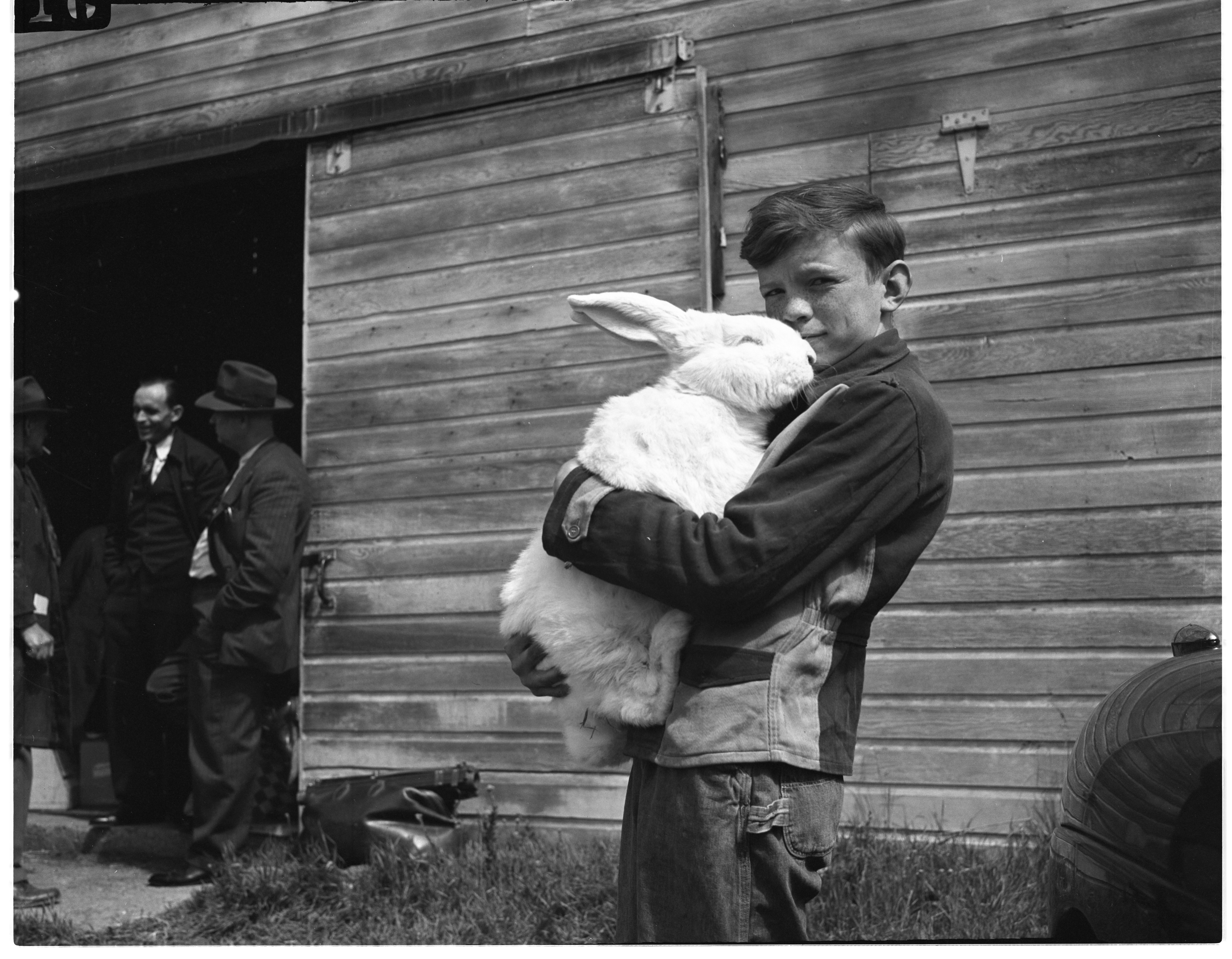 Bob Woodward Holds A Flemish Giant Rabbit Entered In The Michigan State Rabbit Show, May 1946 image