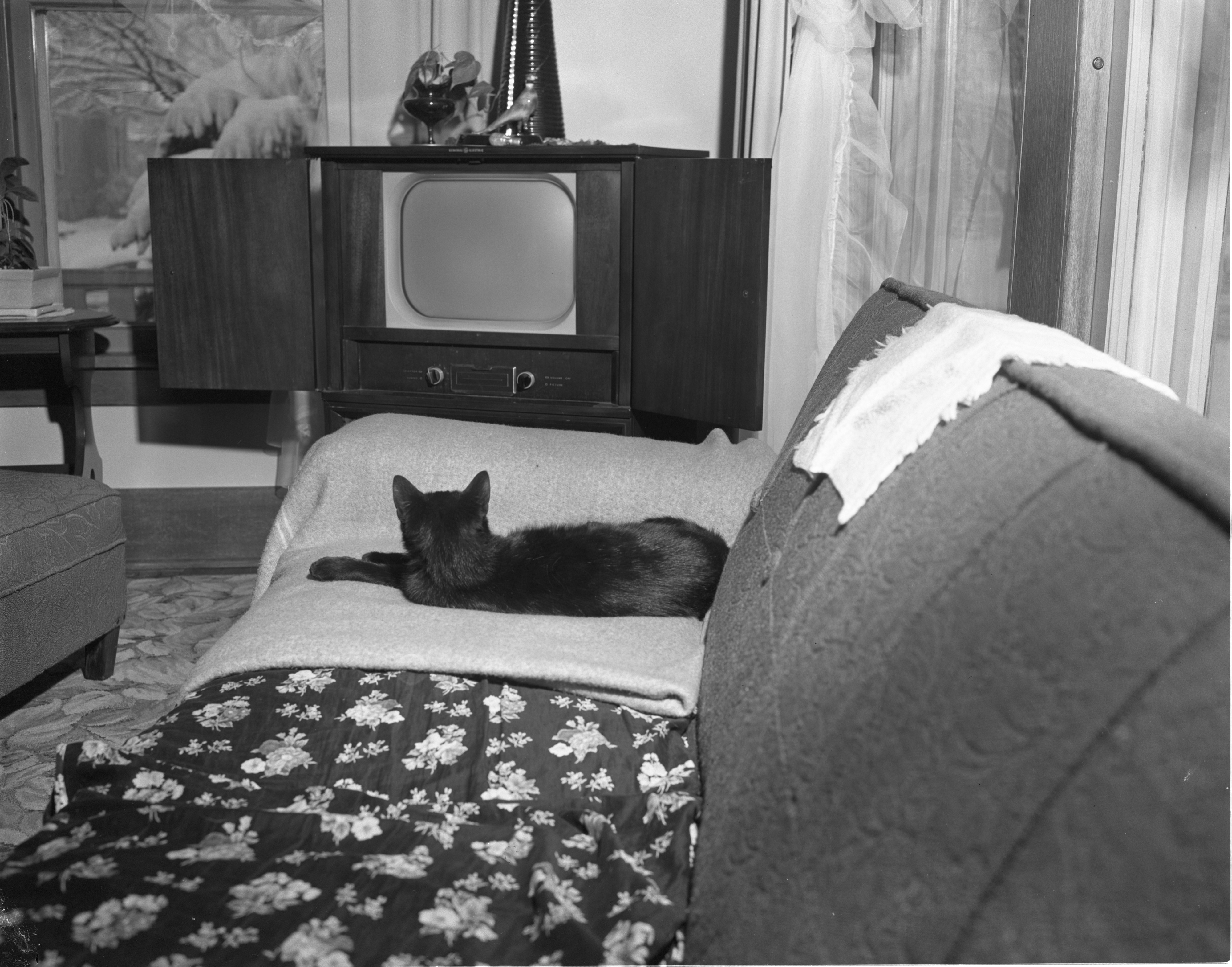 FiFi The Cat Watches Television, March 1956 image