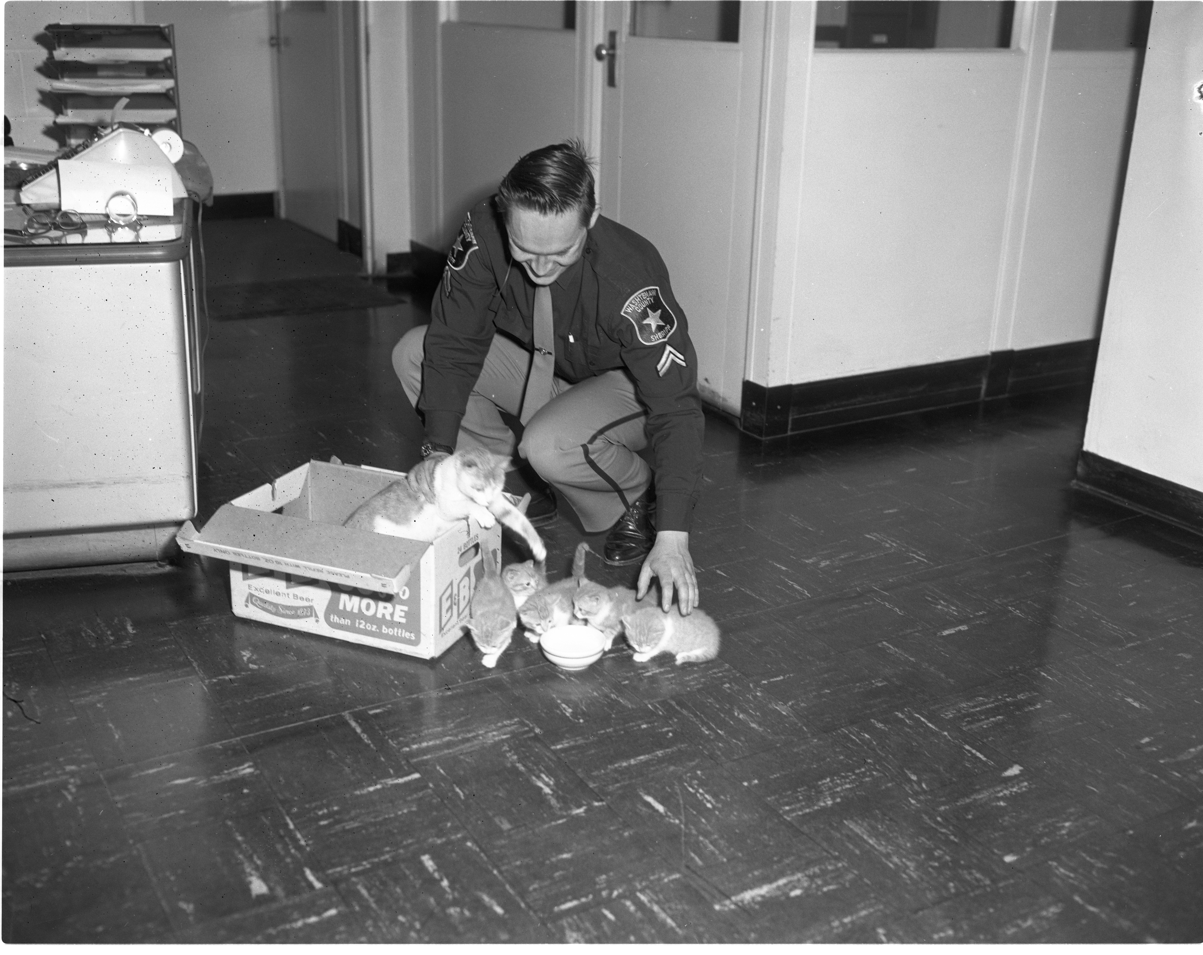 Cpl. David Severance And Abandoned Cats, March 1966 image