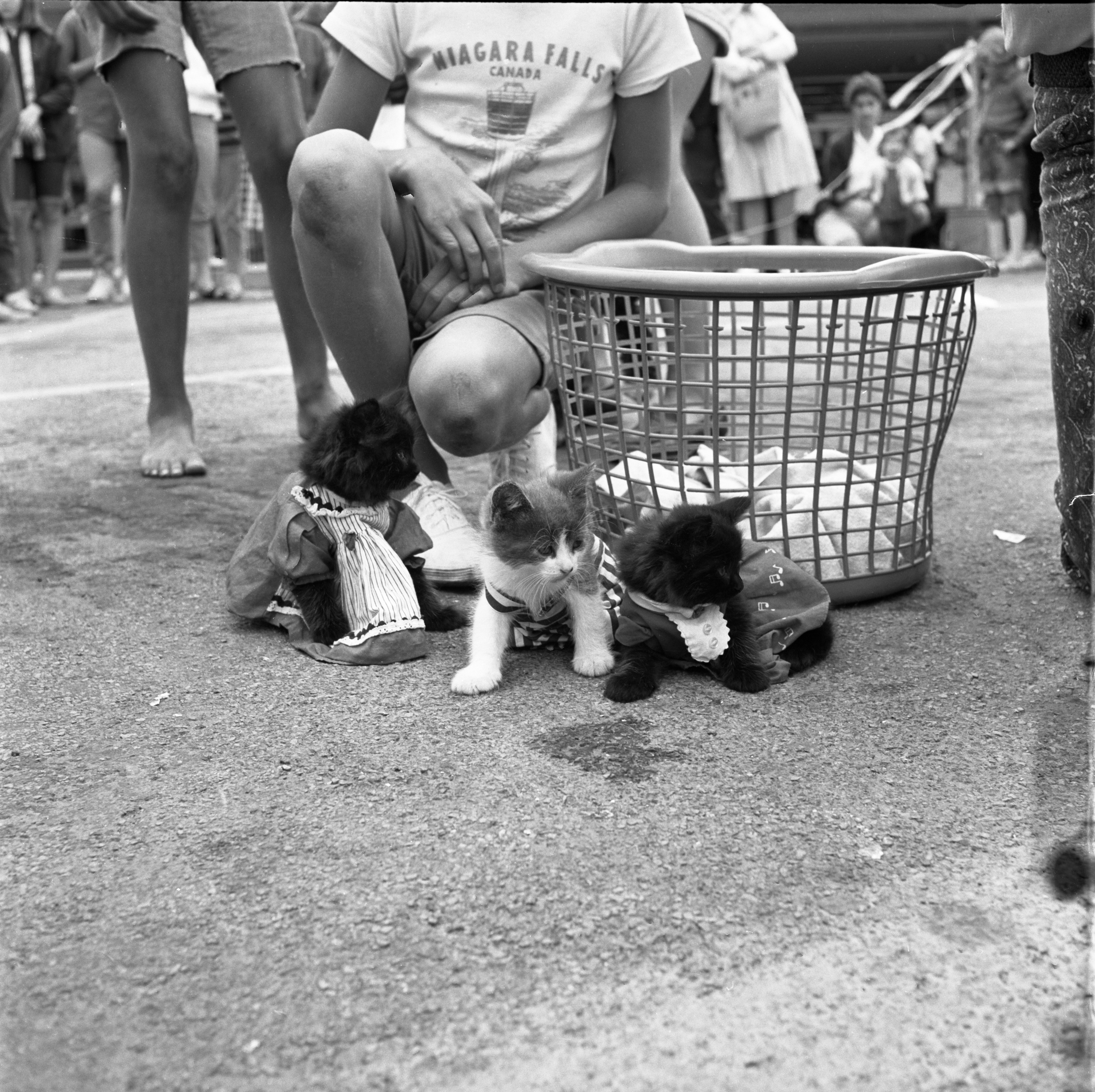 Kittens Dressed Up At Westgate Shopping Center's Pet Circus, July 17, 1967 image