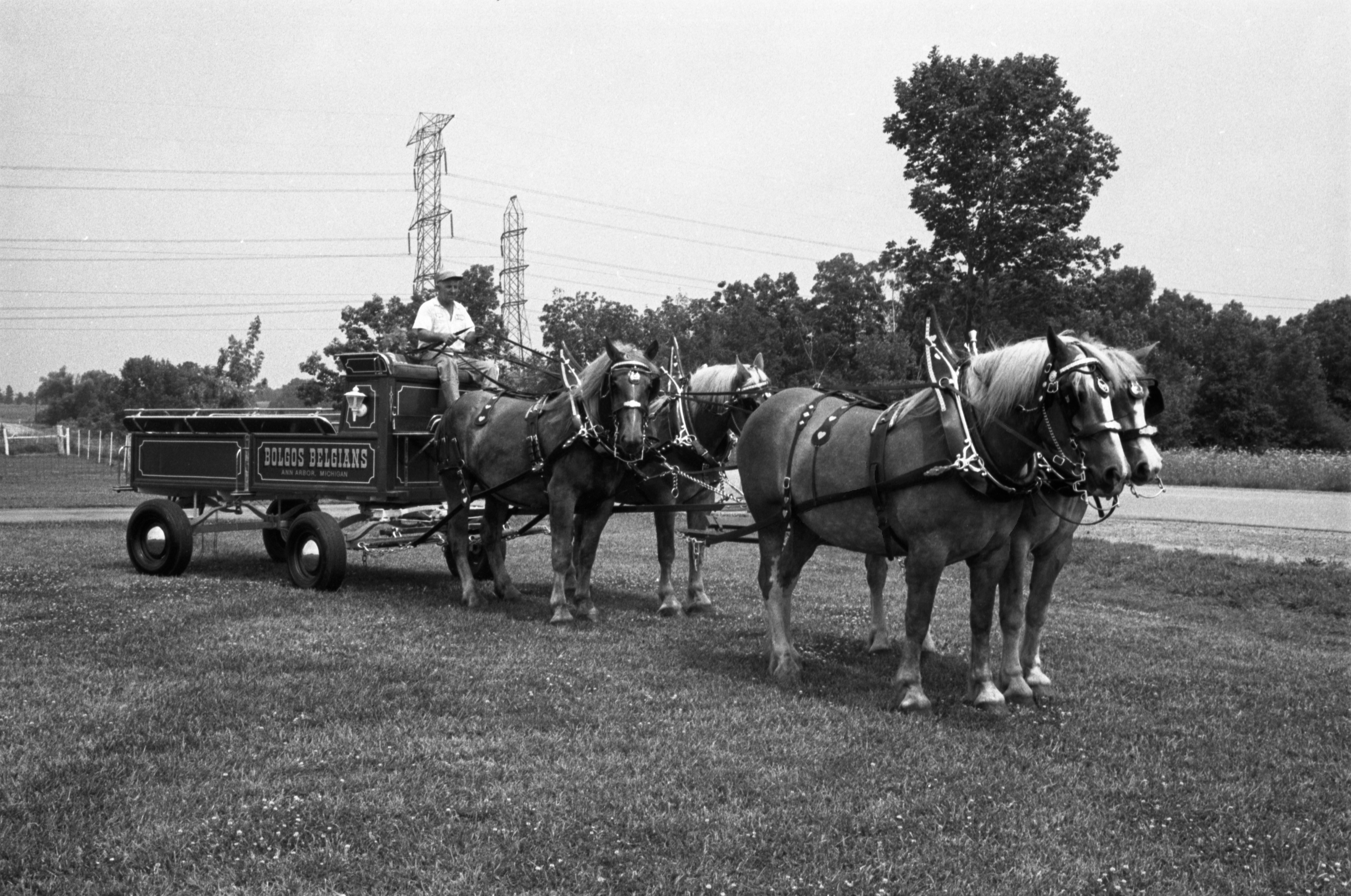 Zina Bolgos With His Belgian Draft Horses, July 29, 1973 image