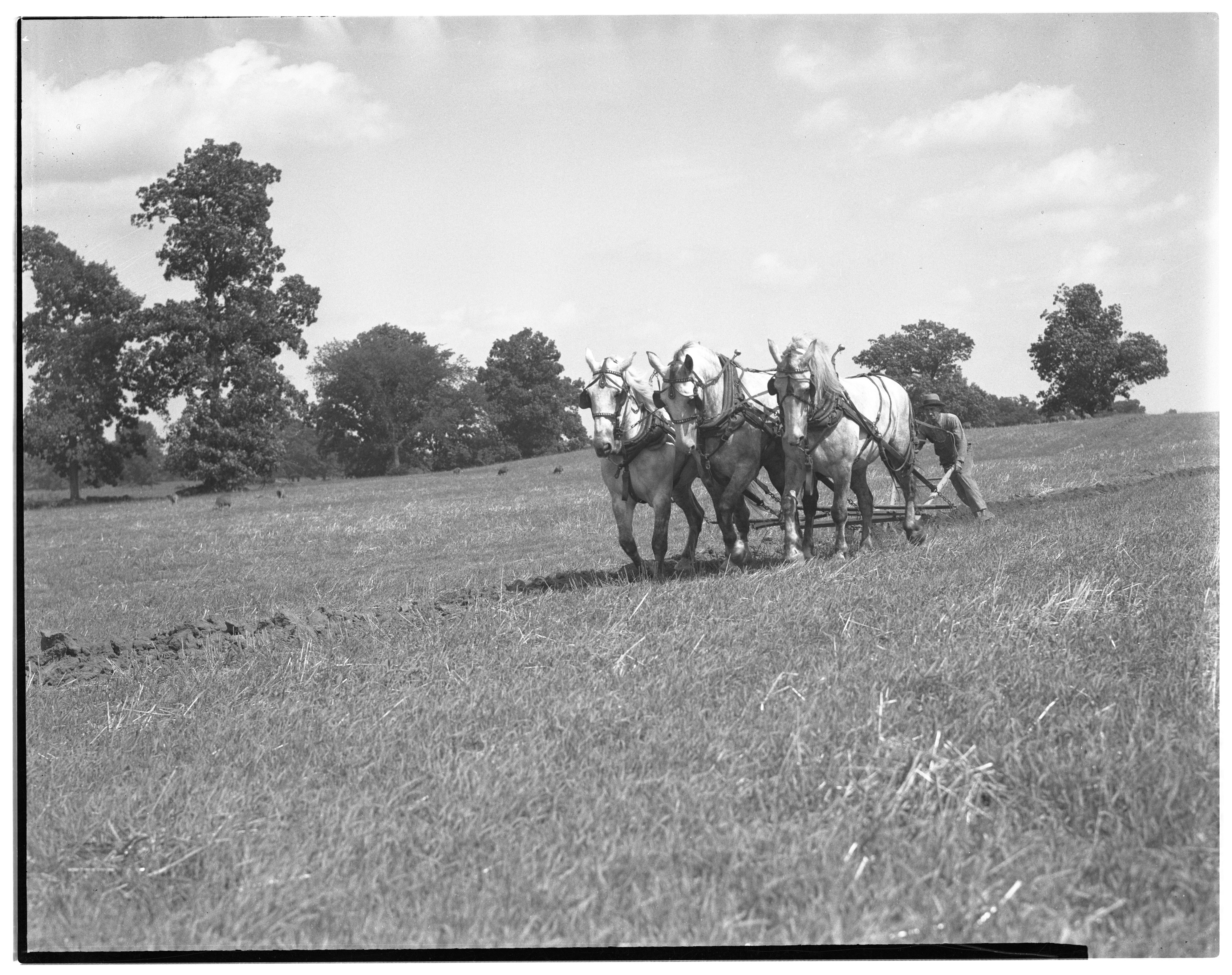 Plowing with a Three-Horse Team image