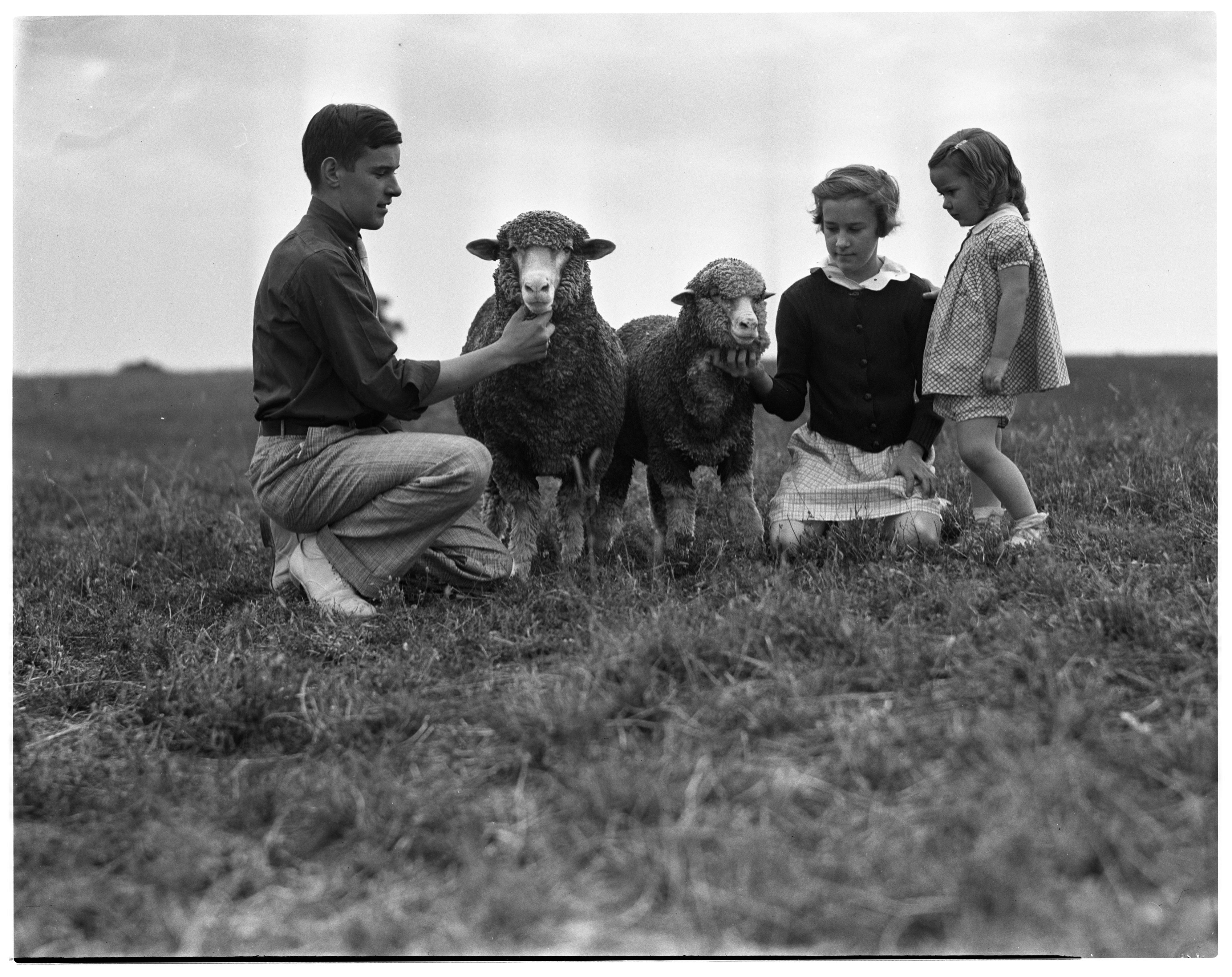 Robert Mast & Sisters With Champion Sheep, September 1937 image