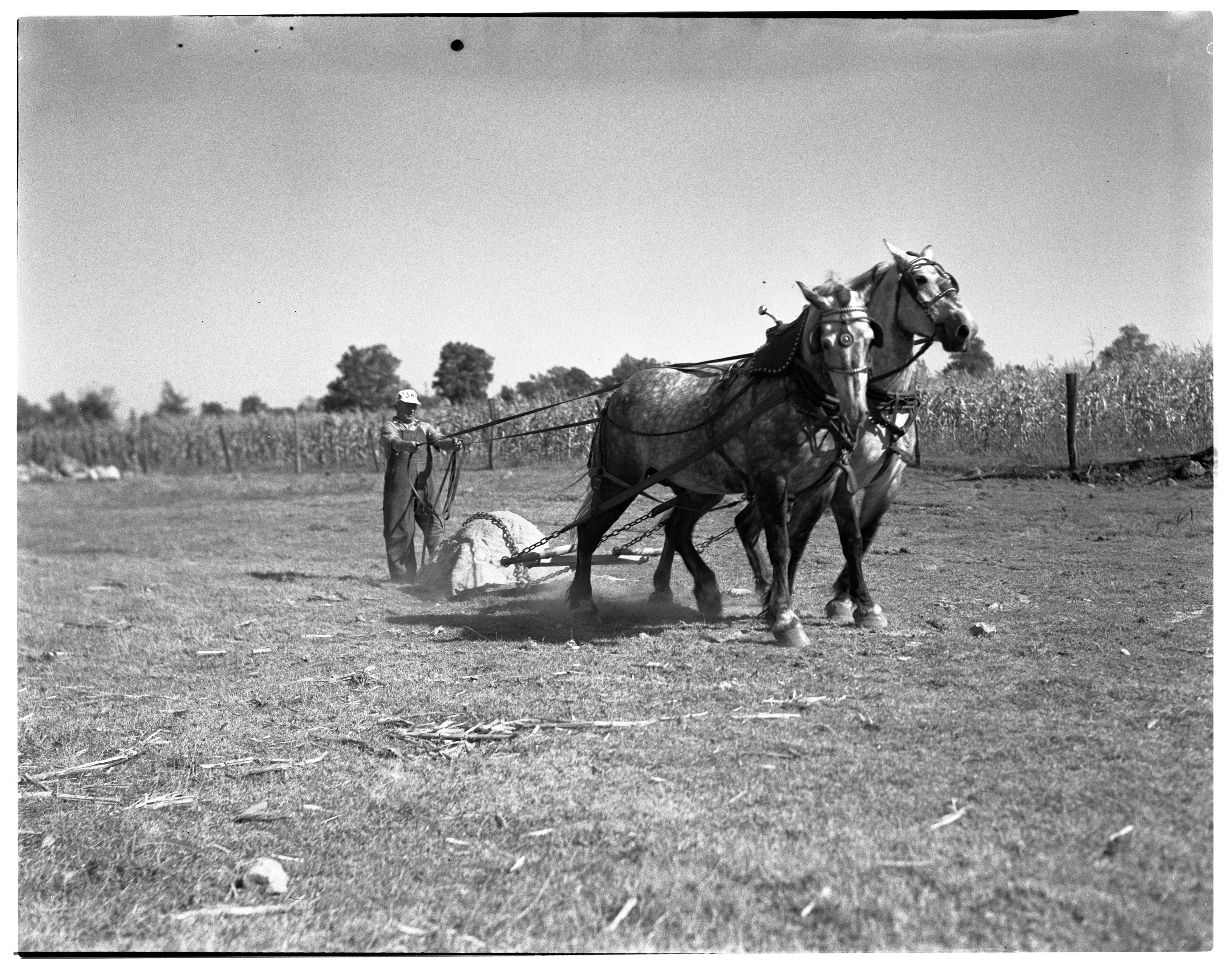 Fred Braun & His Horse Pulling Team, August 1936 image