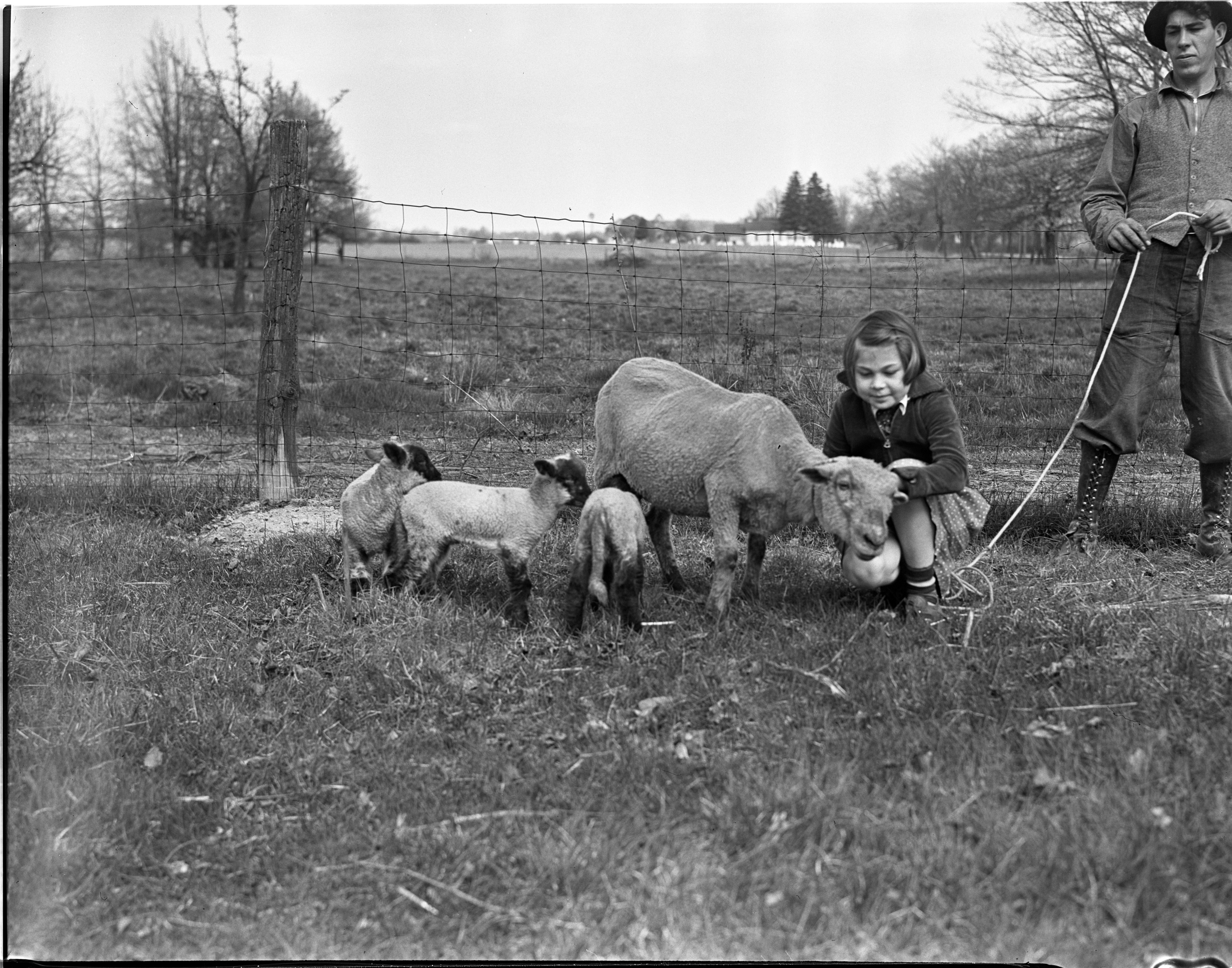 Dwyer Girl with Ewe and Triplets, Plainfield image