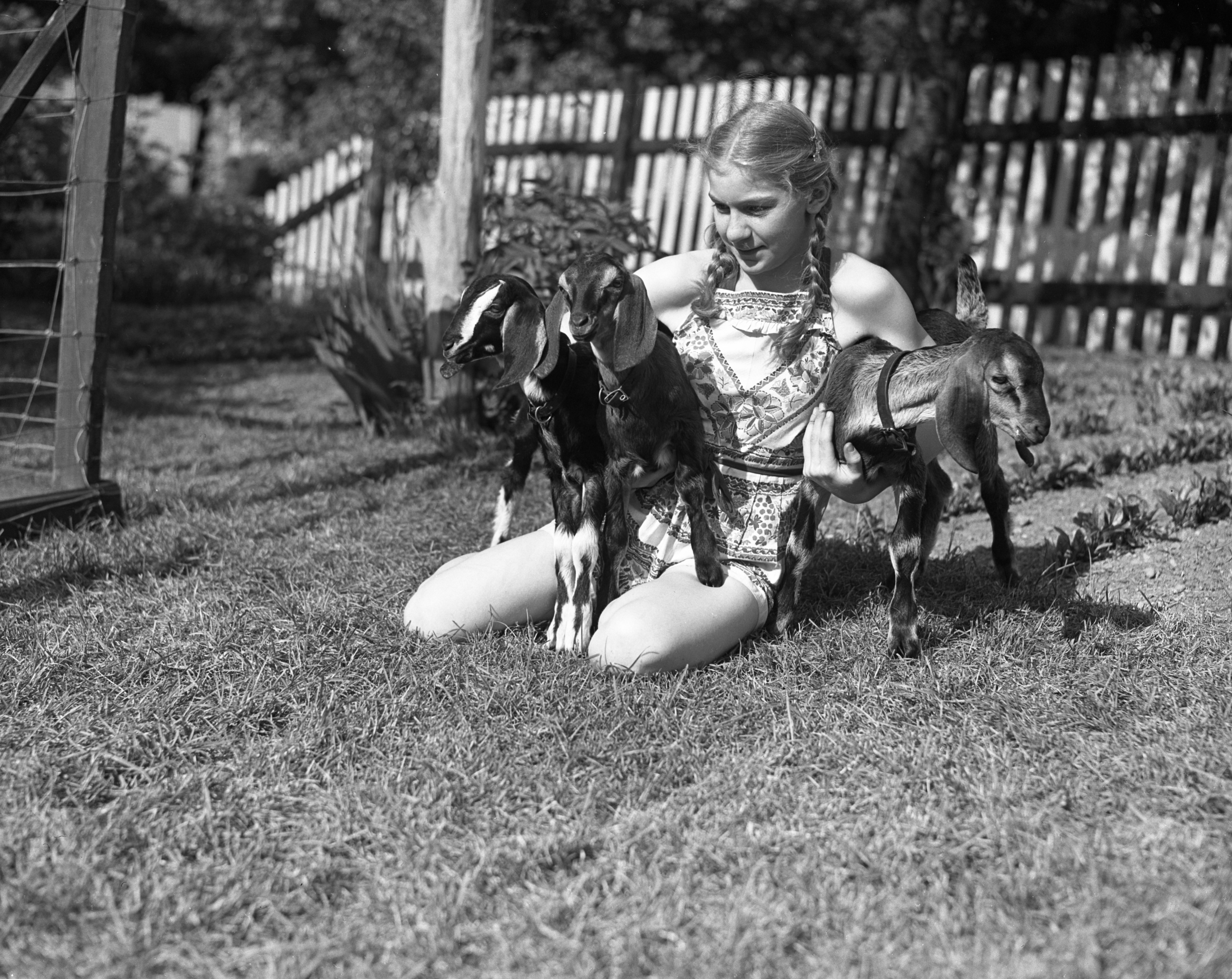 Karlen Gretchen Lutz of 544 N Division, with her family's triplet goats, June 1940 image
