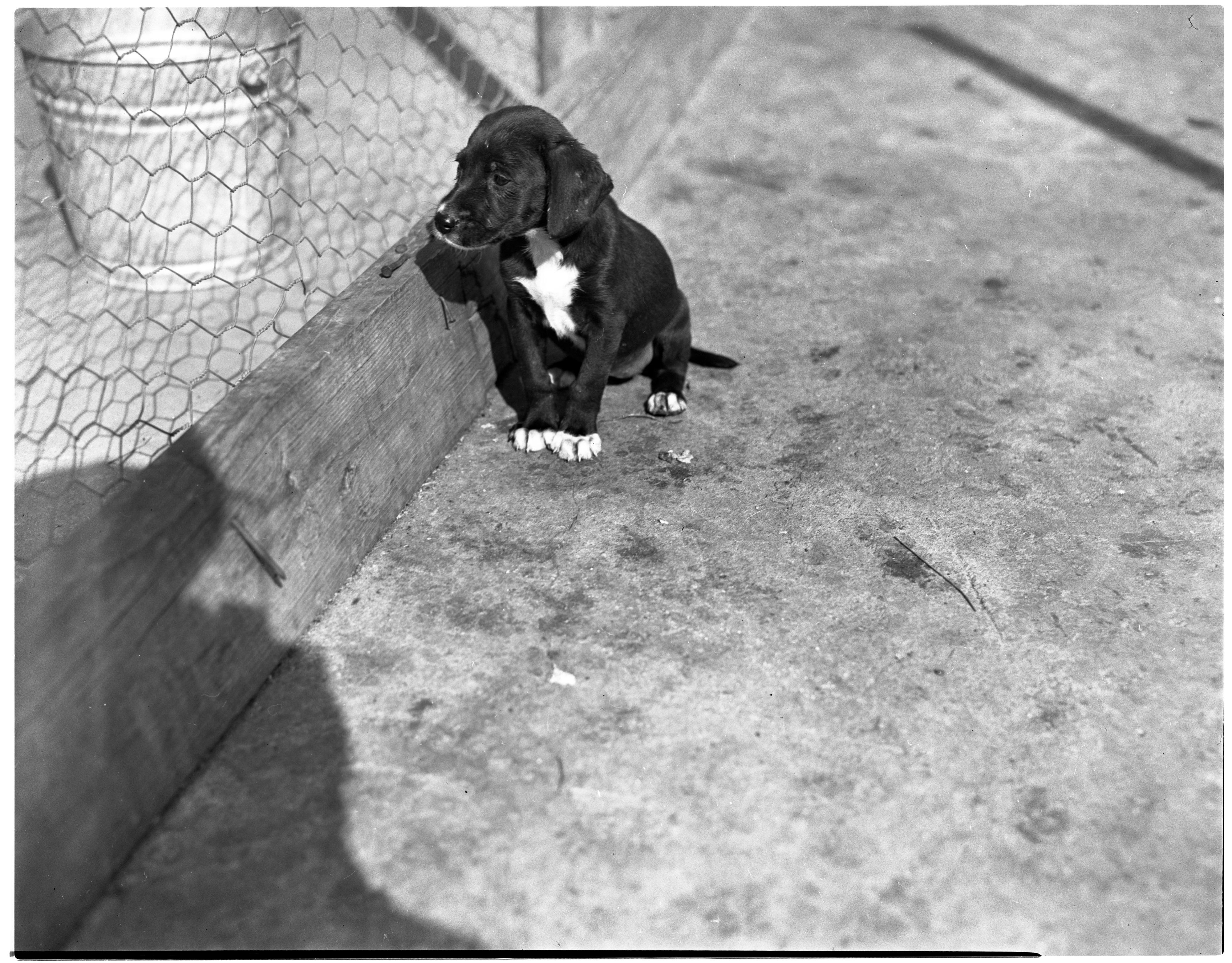 Ann Arbor Humane Society Dogs For Adoption