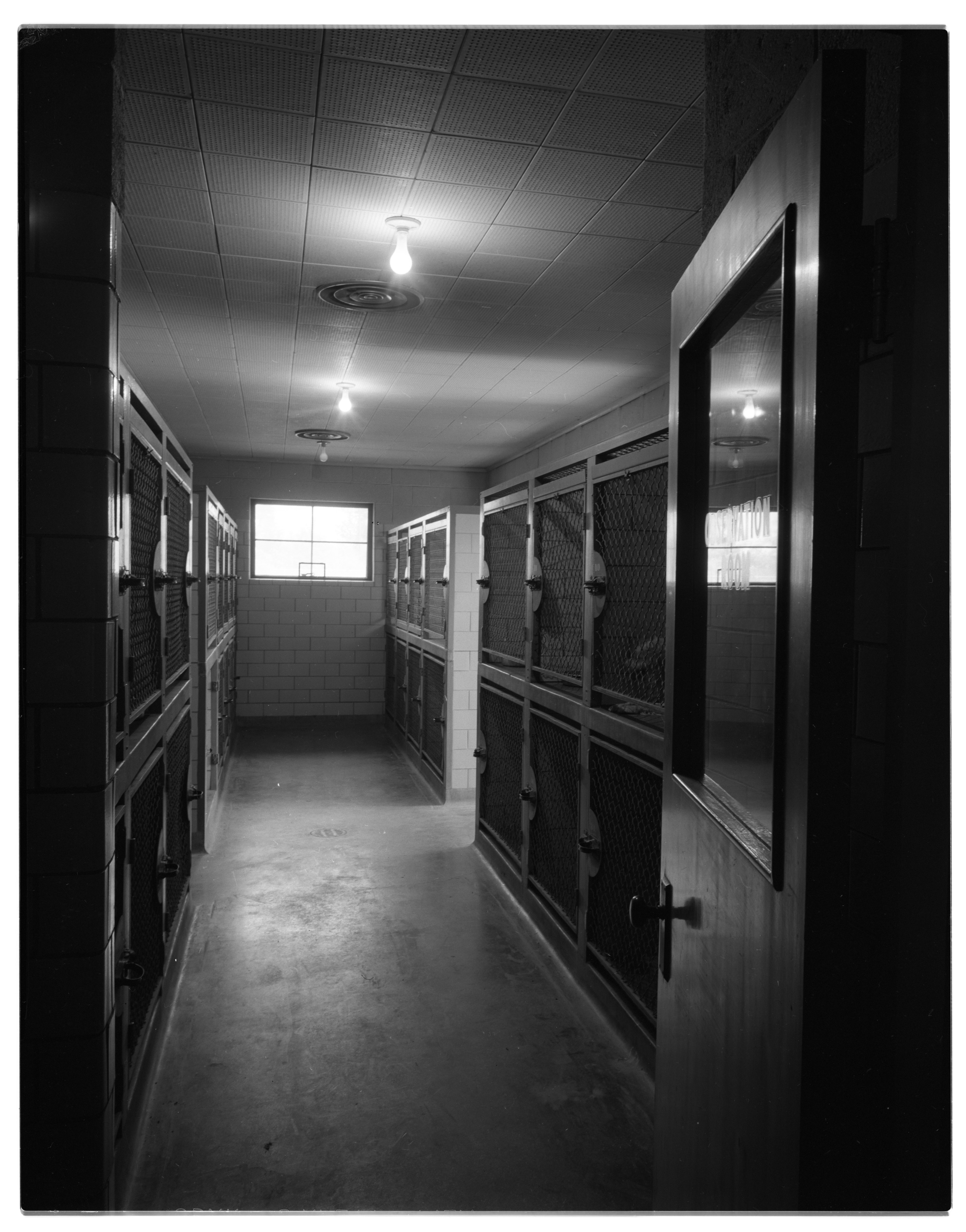 Indoor Cages at Humane Society Shelter, May 1957 image