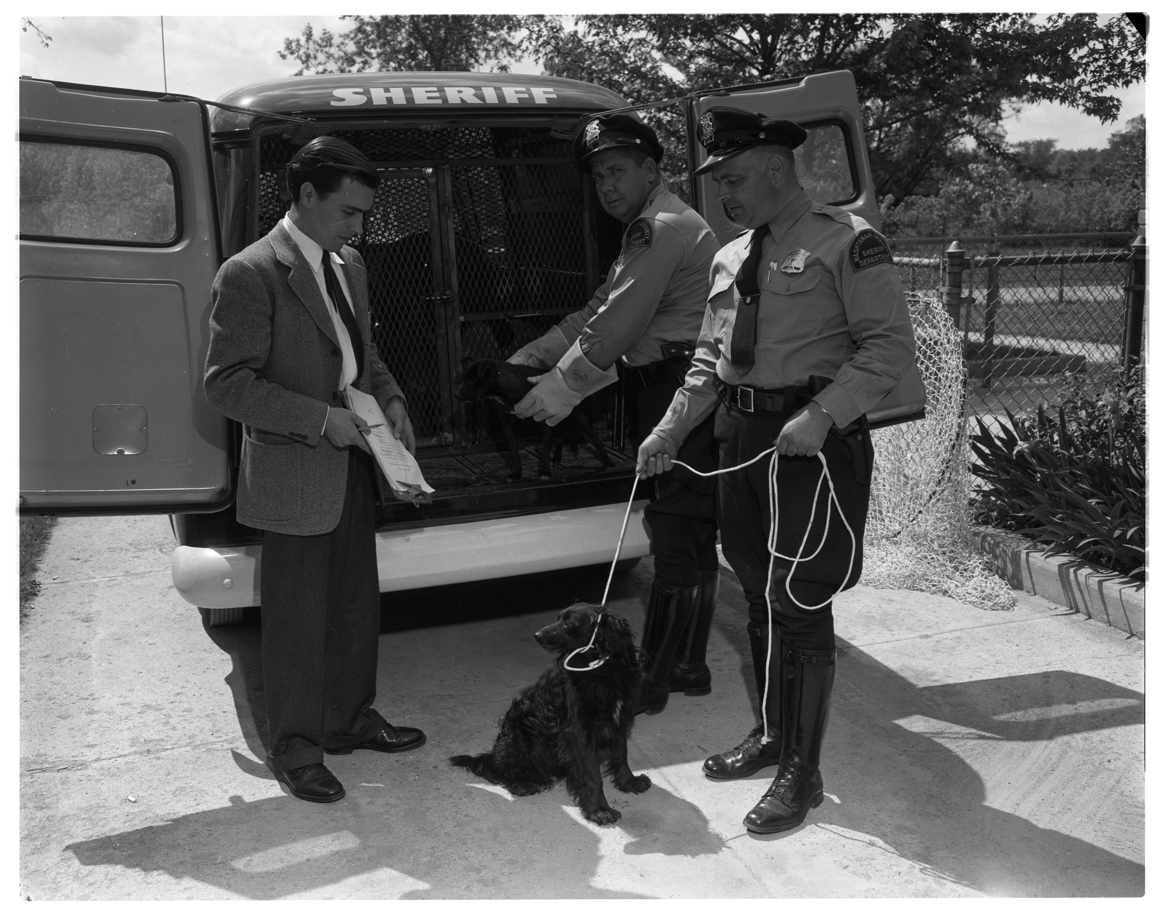 Sheriff's Department Delivers Lost Dog to Humane Society Shelter, May 1957 image