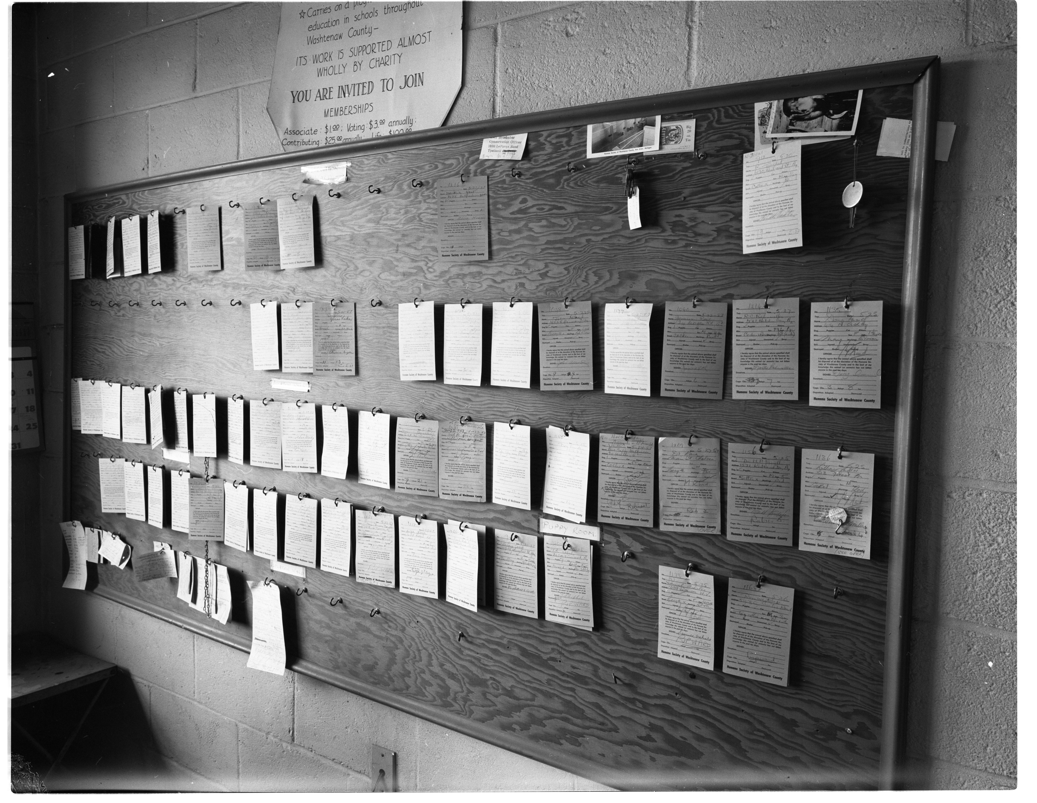 Tags for Lost or Unwanted Dogs and Cats at Humane Society Shelter, May 1957 image