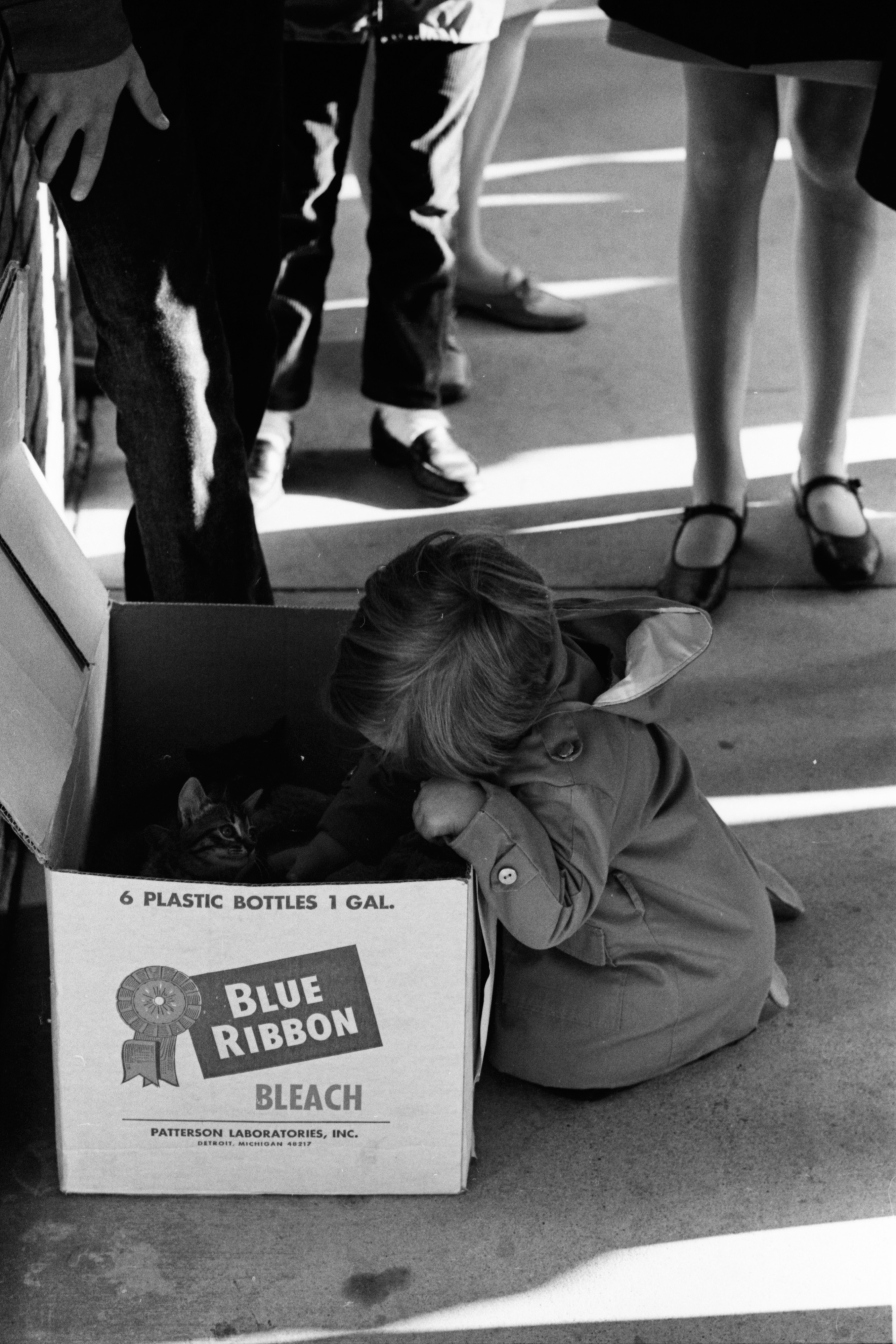 Free Kittens at the Farmers Market, October 1968 image