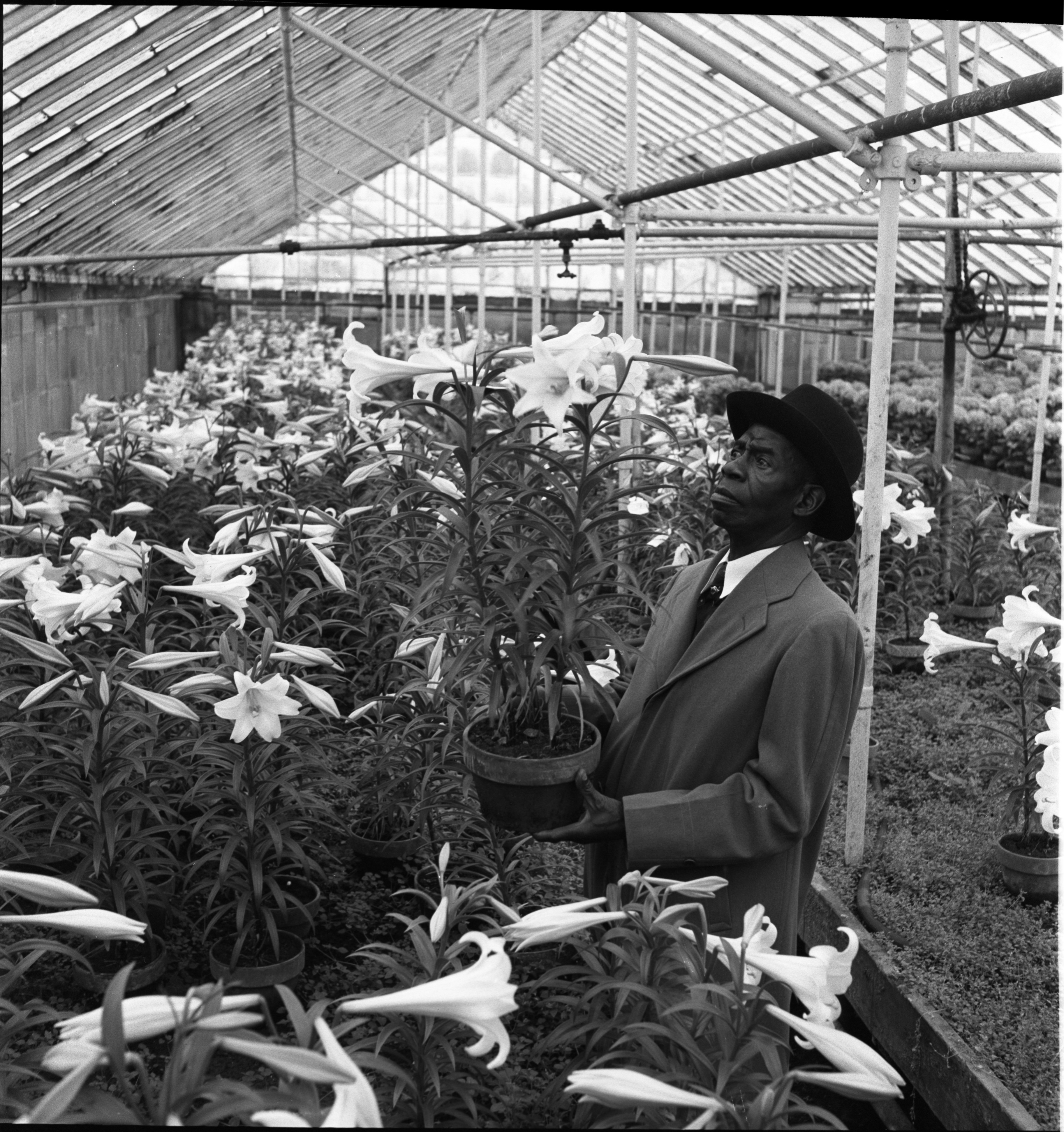 Image from Rev. C. W. Carpenter Choosing Easter Lilies, April 1954