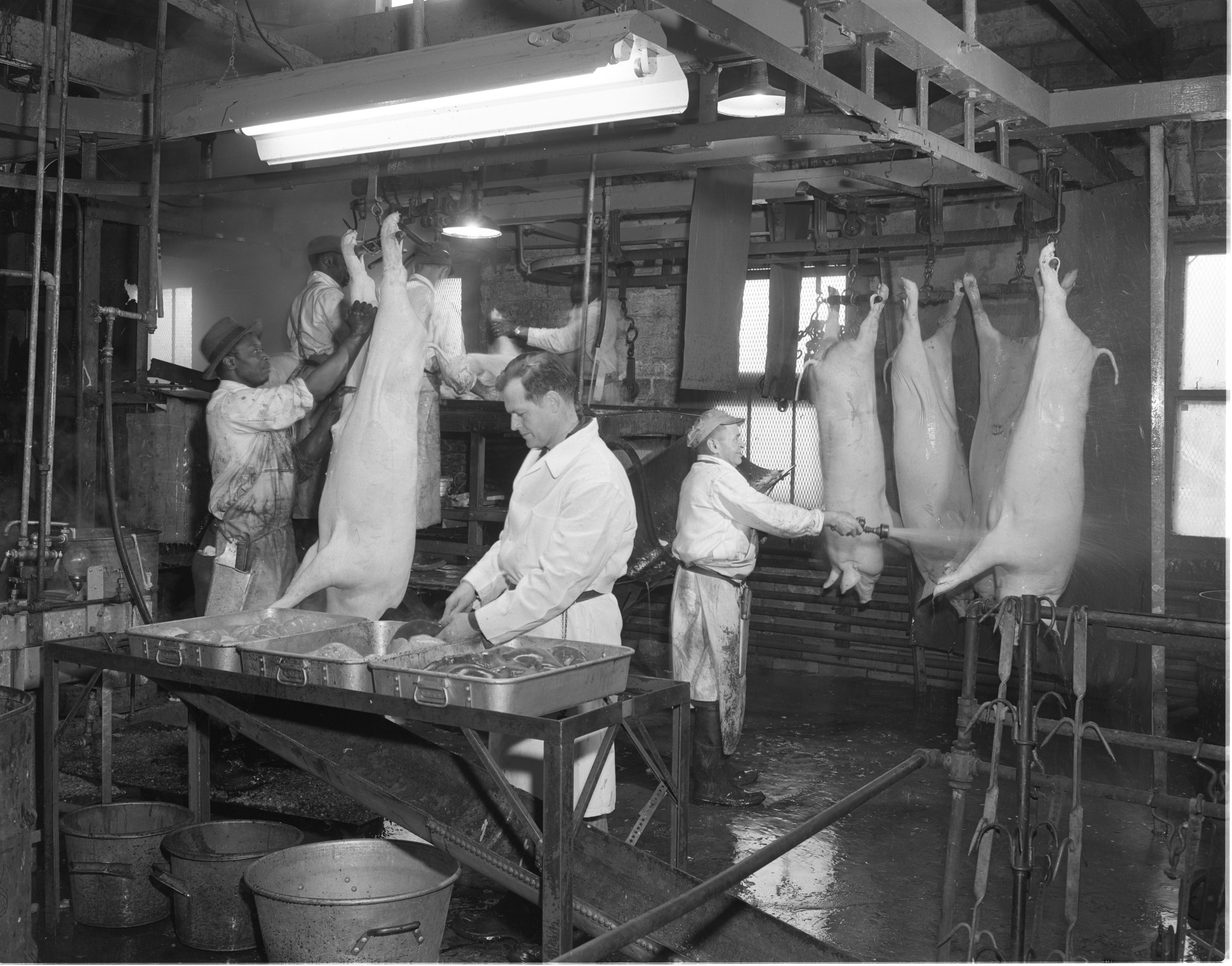 Peters Sausage Company - Animal Slaughter & Cleaning, March 1954 image