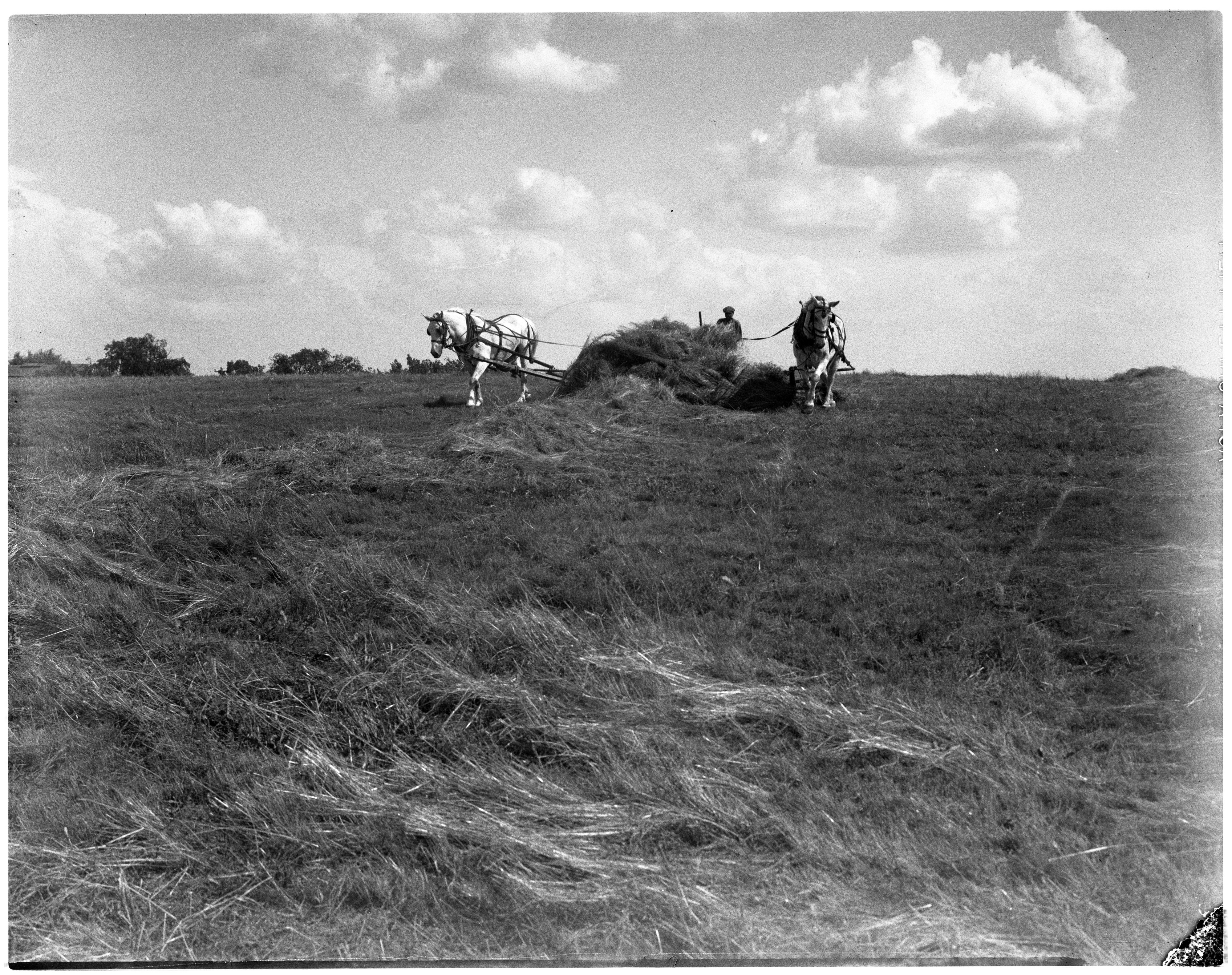 Cutting Hay on the Dhu Varren Farm, Whitmore Lake Rd, 1935 image