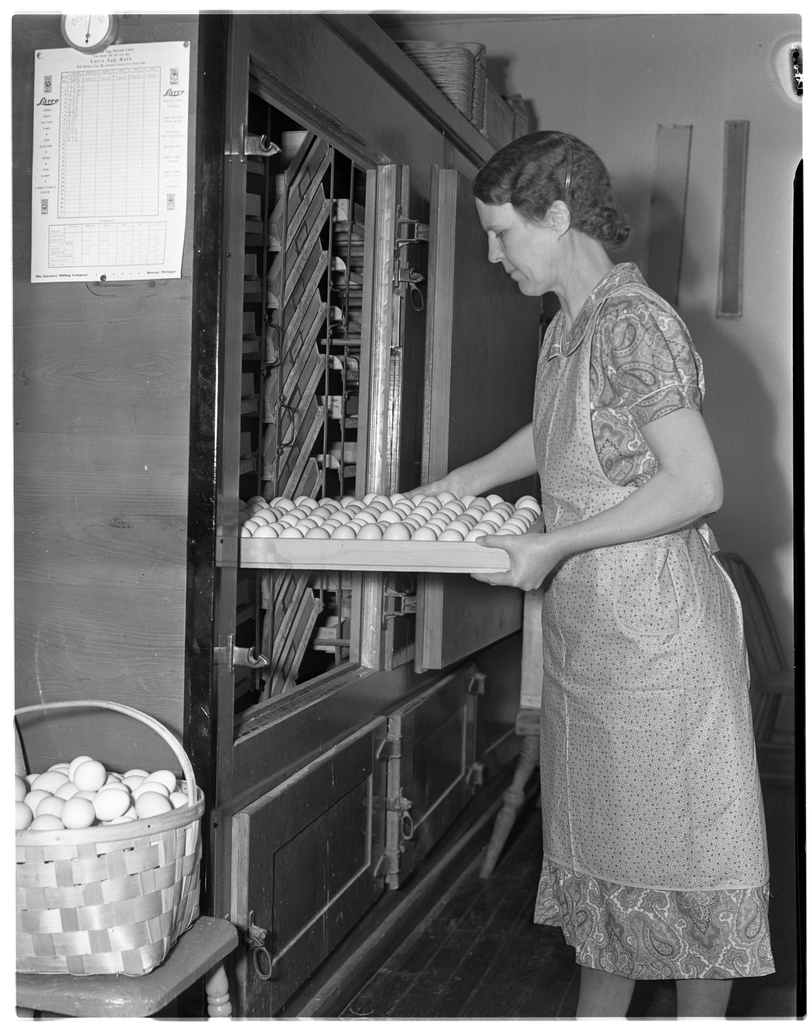 Myrtle Parker Puts Eggs Into An Incubator At The Parker Poultry Farm & Hatchery, January 1938 image