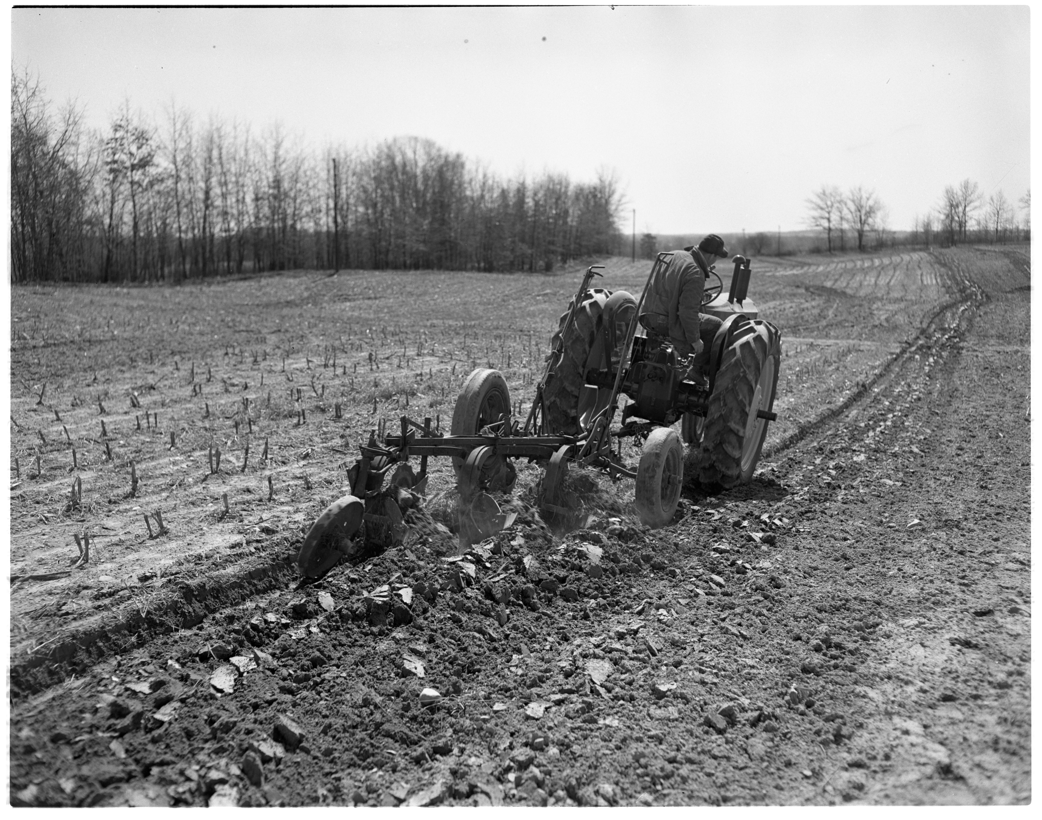 Massey-Harris Tractor Pulls Three-Plow Unit on Warren Murdoch Farm, April 1949 image
