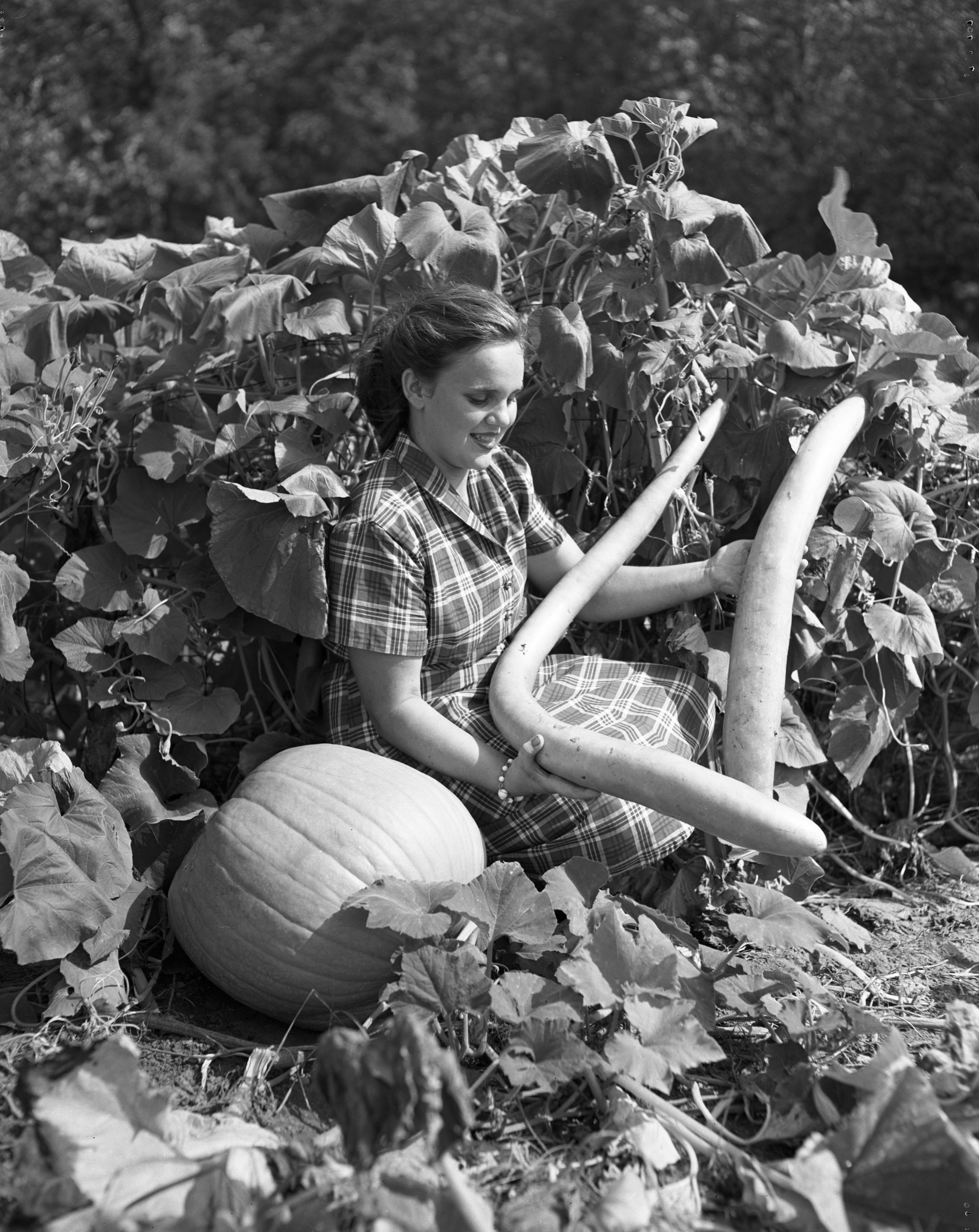 Glenna Sunday With New Guinea Beans And Pumpkins, September 1951 image