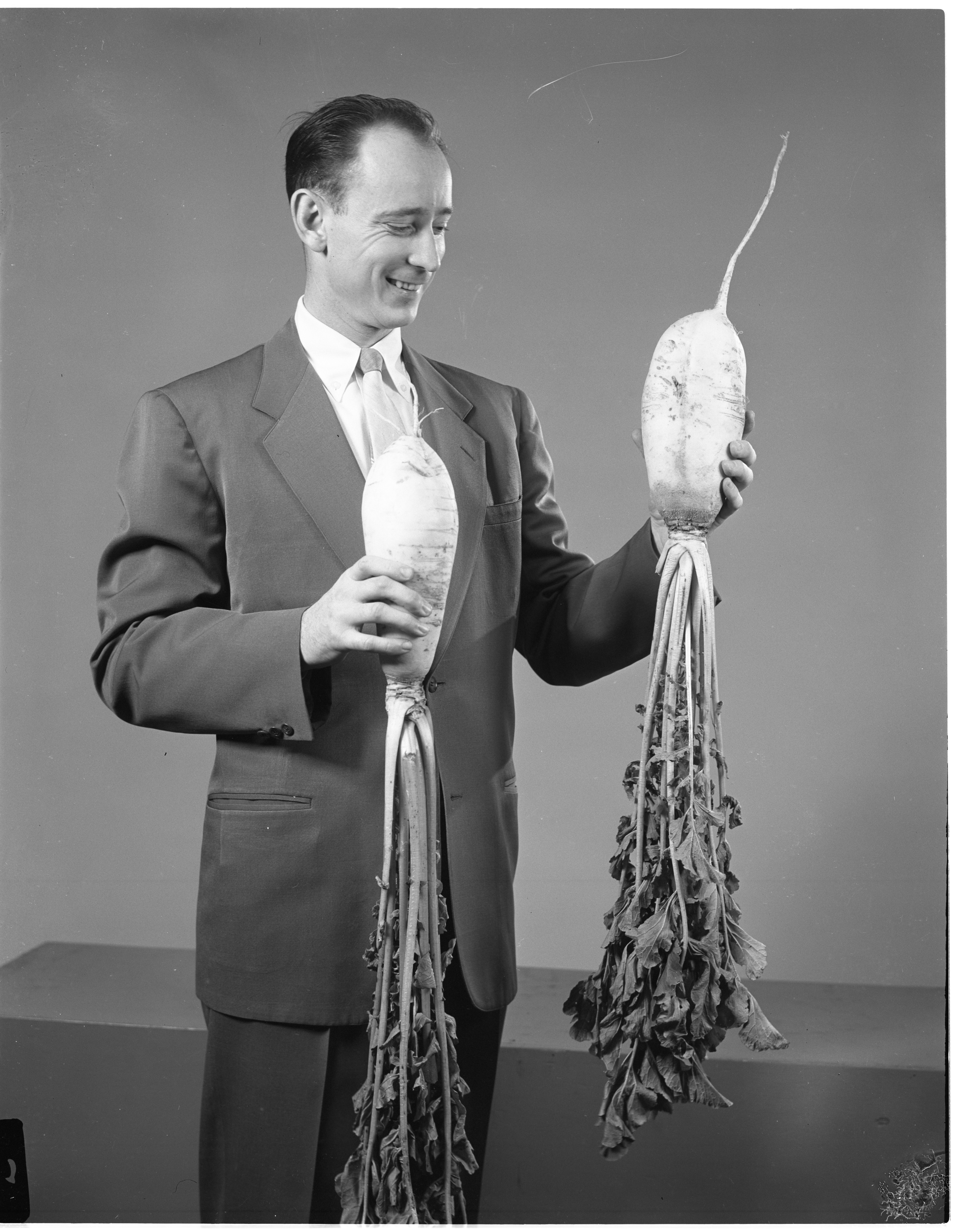 Vernon Shipley With Giant Radishes From His Garden, October 1955 image