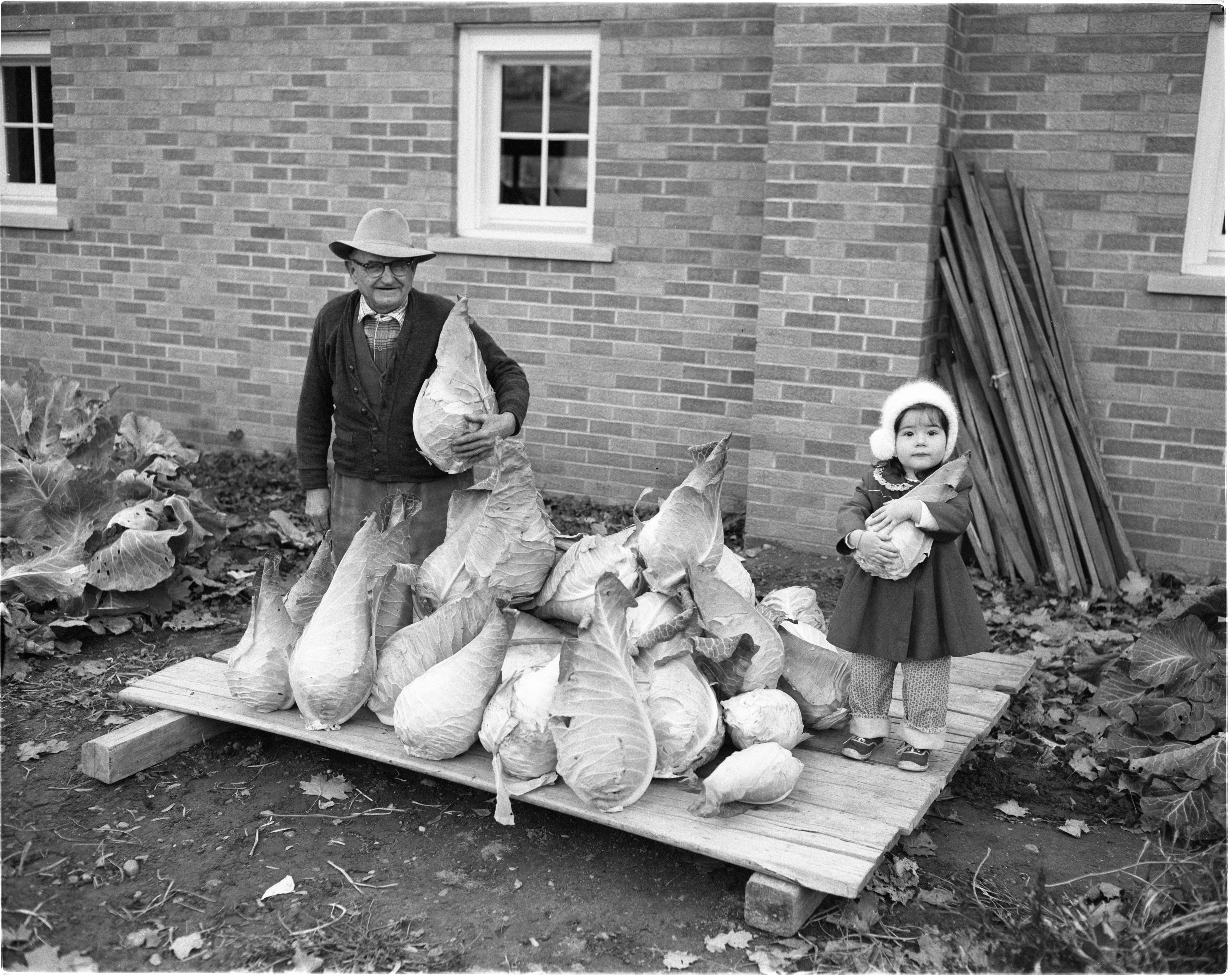 J. H. Seitz Sr. and Granddaughter Susan Reid with Crop of Cabbage, November 1958 image