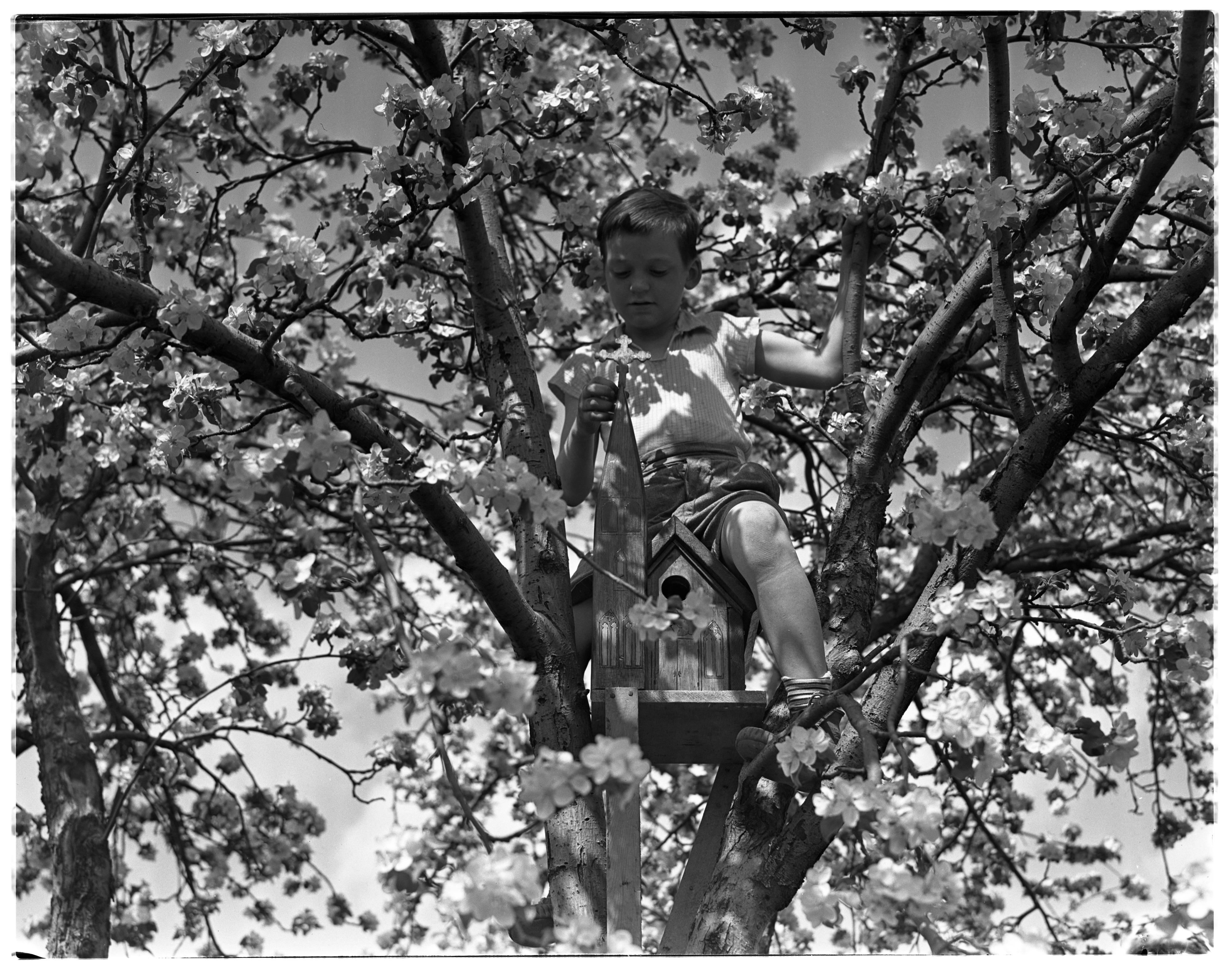 Fabulous Calhoun Boy With Bird House Ann Arbor District Library Download Free Architecture Designs Scobabritishbridgeorg