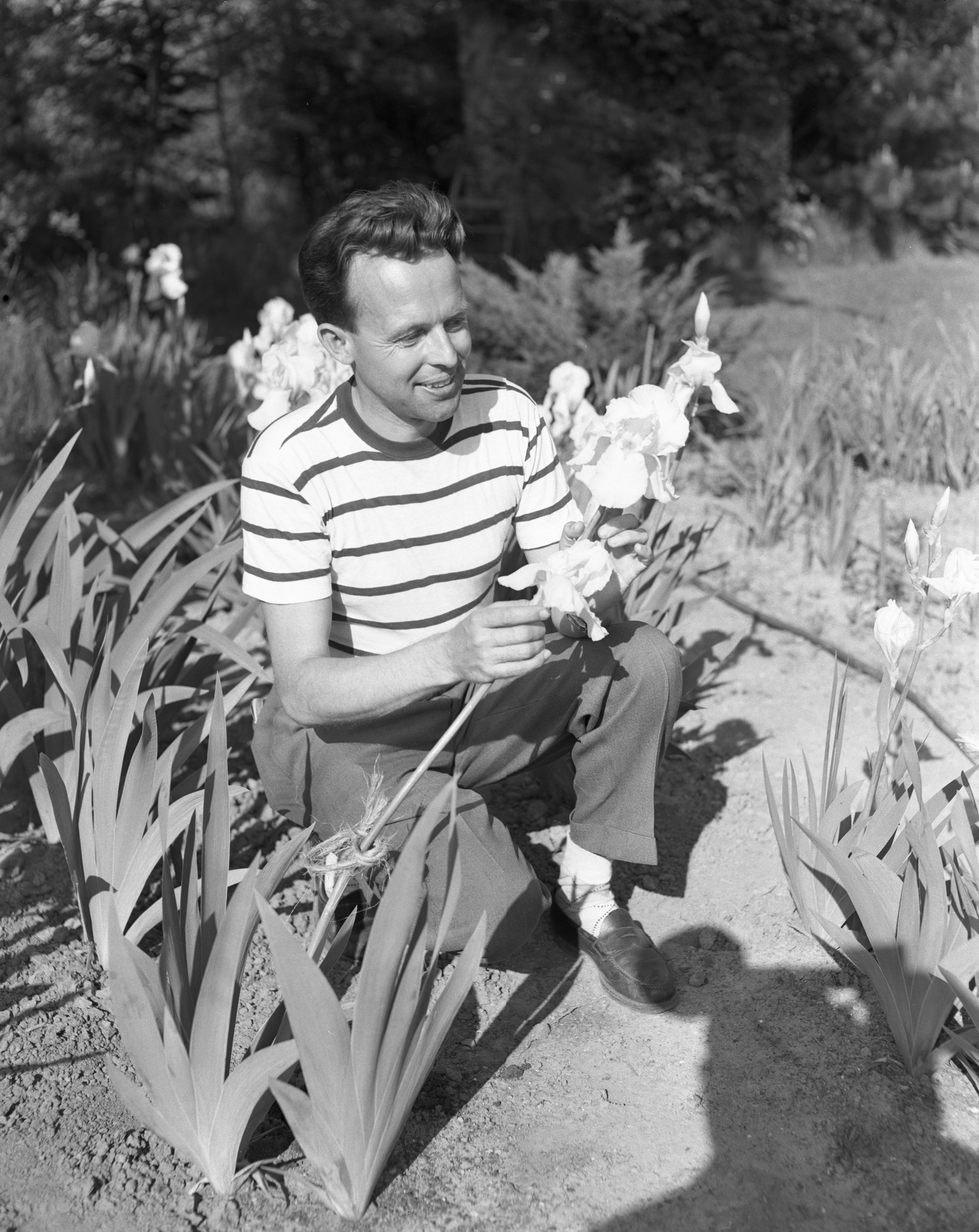 Charles Palmer In His Iris Garden, May 1949 image