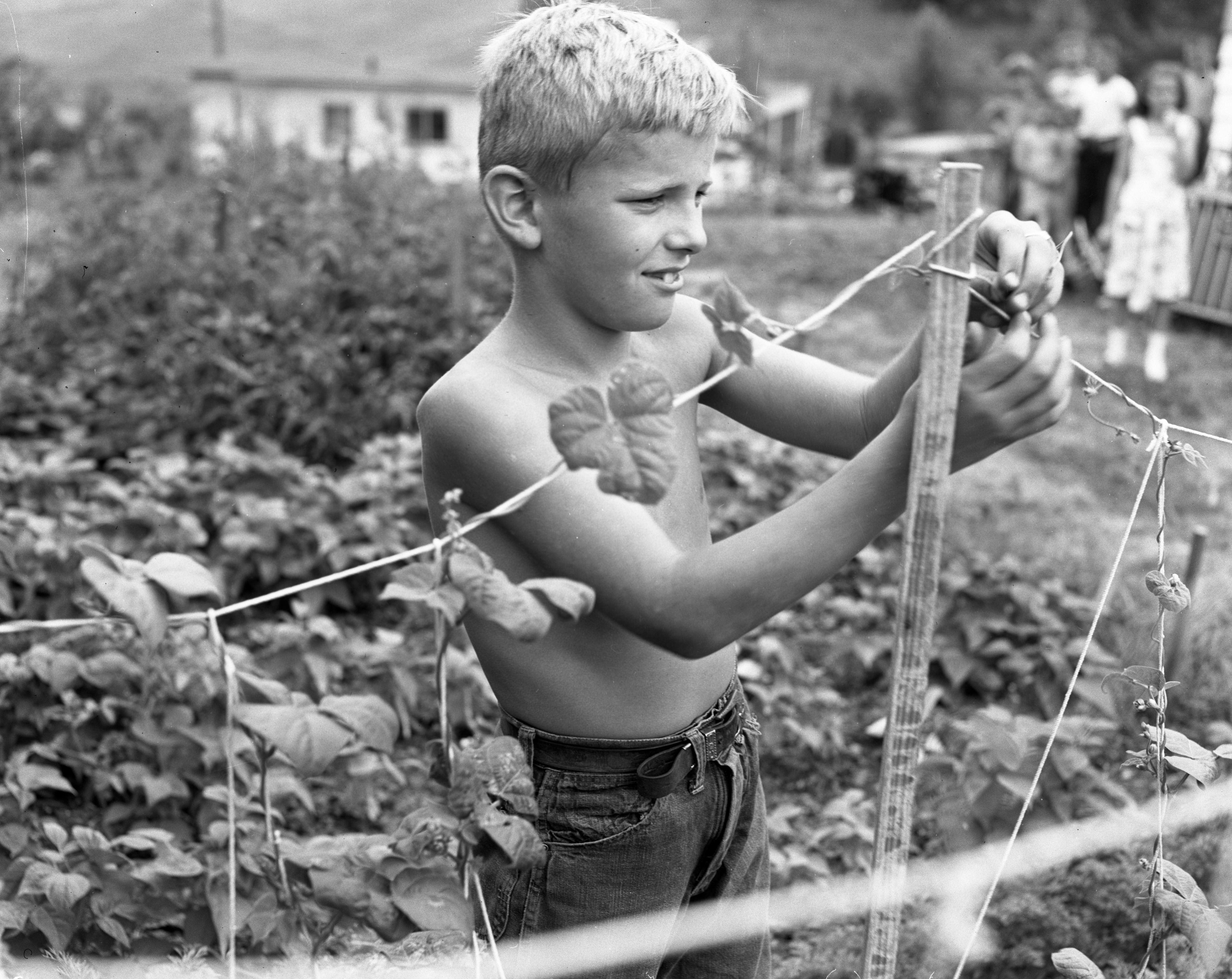 Jack Bailey Preparing For Junior Garden Festival, July 1952 image