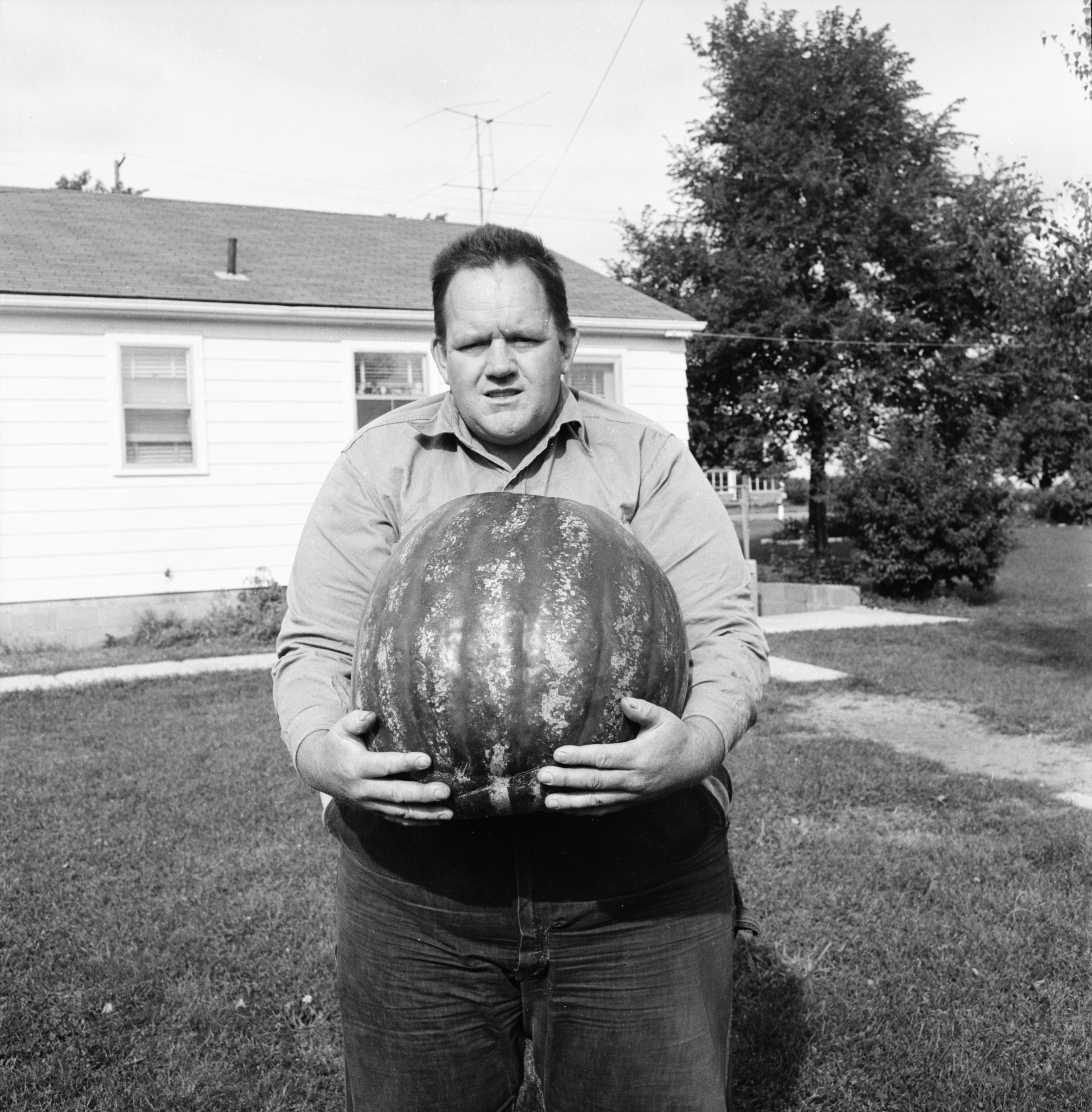 Image from Sanford Phillips & 60-Lb. Watermelon He Raised, October 1961