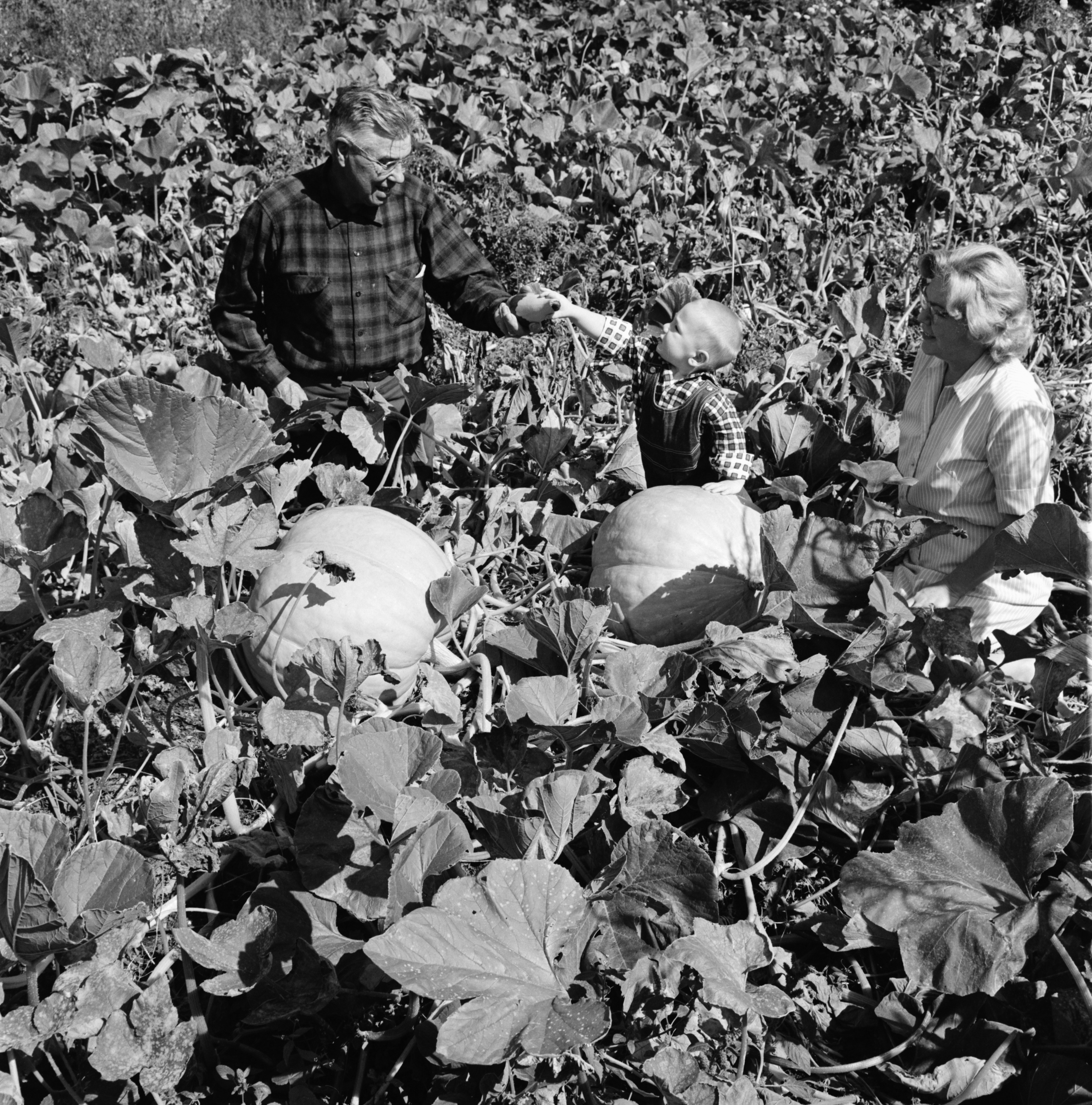 Mrs. Mackmiller's Vegetable Garden, October 1967 image