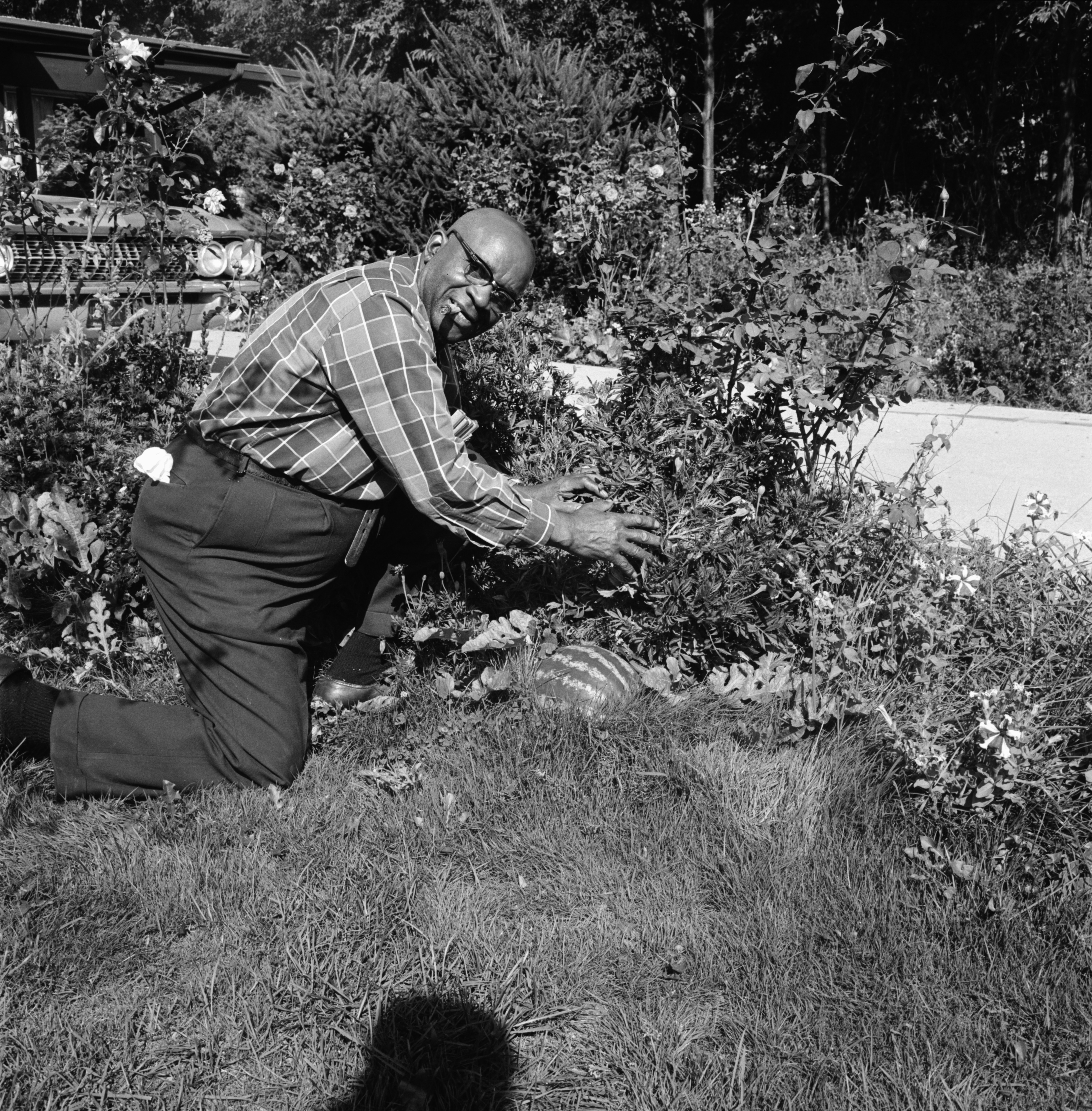 George Whitman and Watermelon in Garden, October 1968 image
