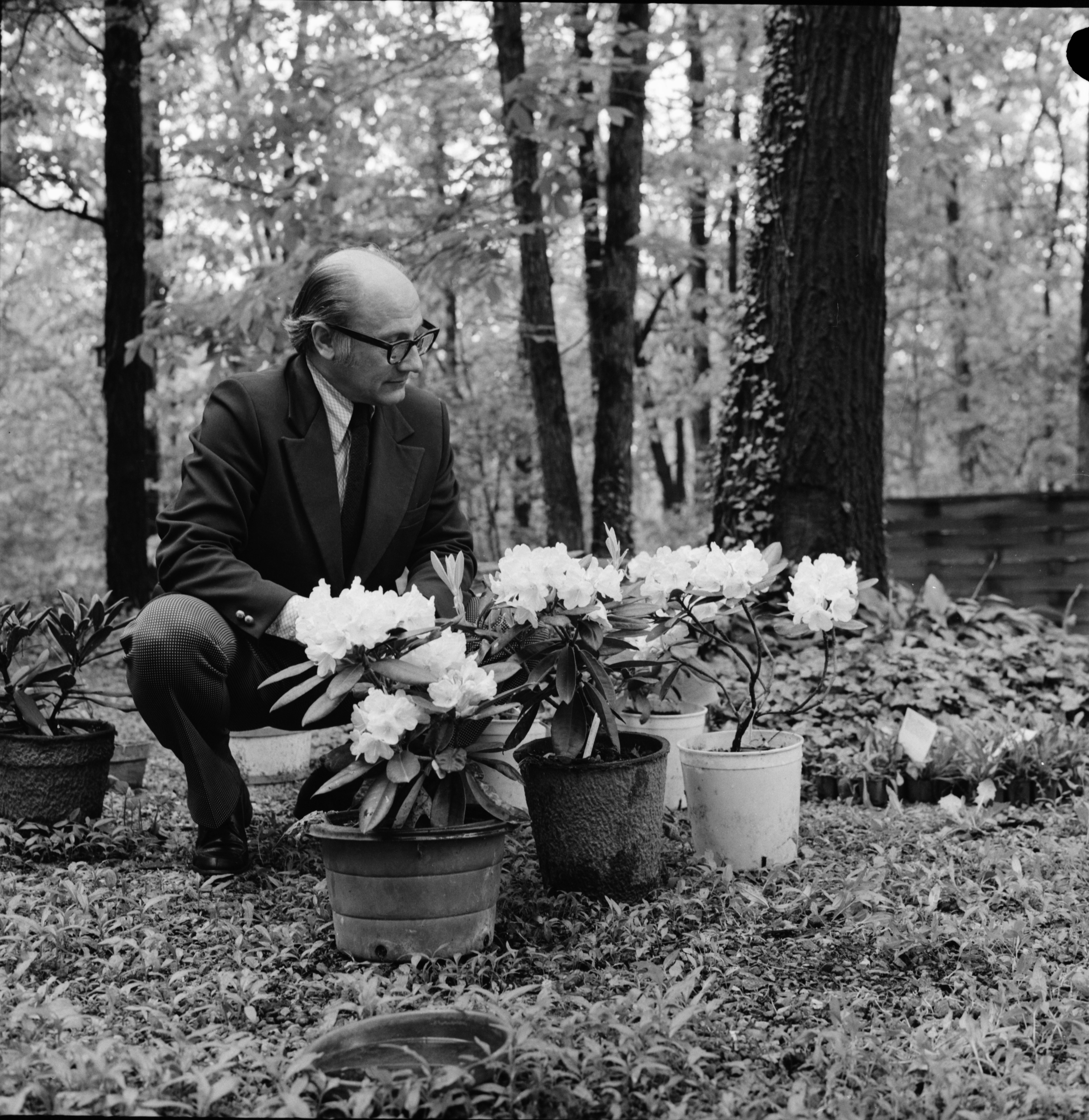 Dr. Robert E. Moyers and Rhododendrons, May 1973 image