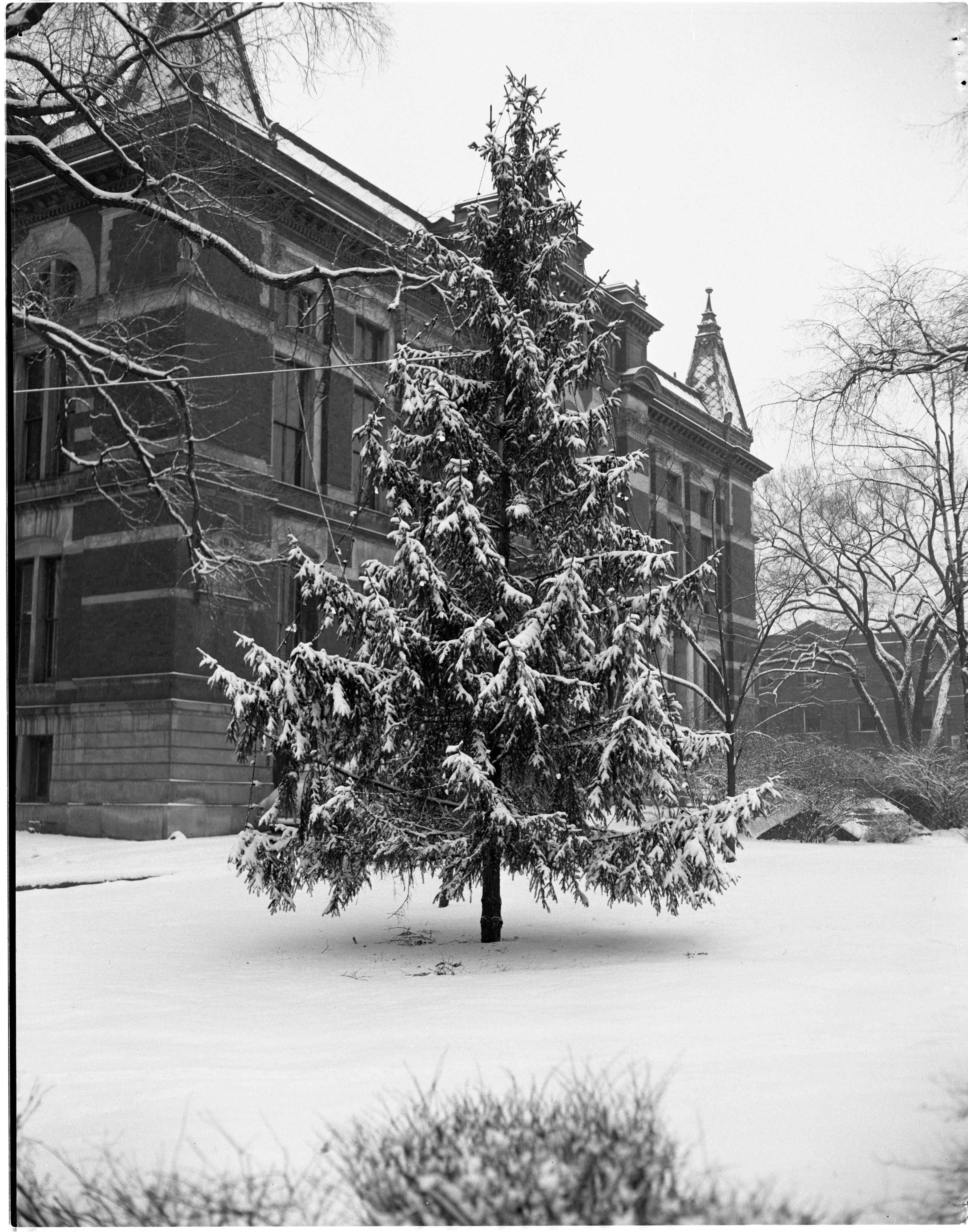 Ann Arbor's Municipal Christmas Tree On The Lawn Of The Courthouse, December 1952 image
