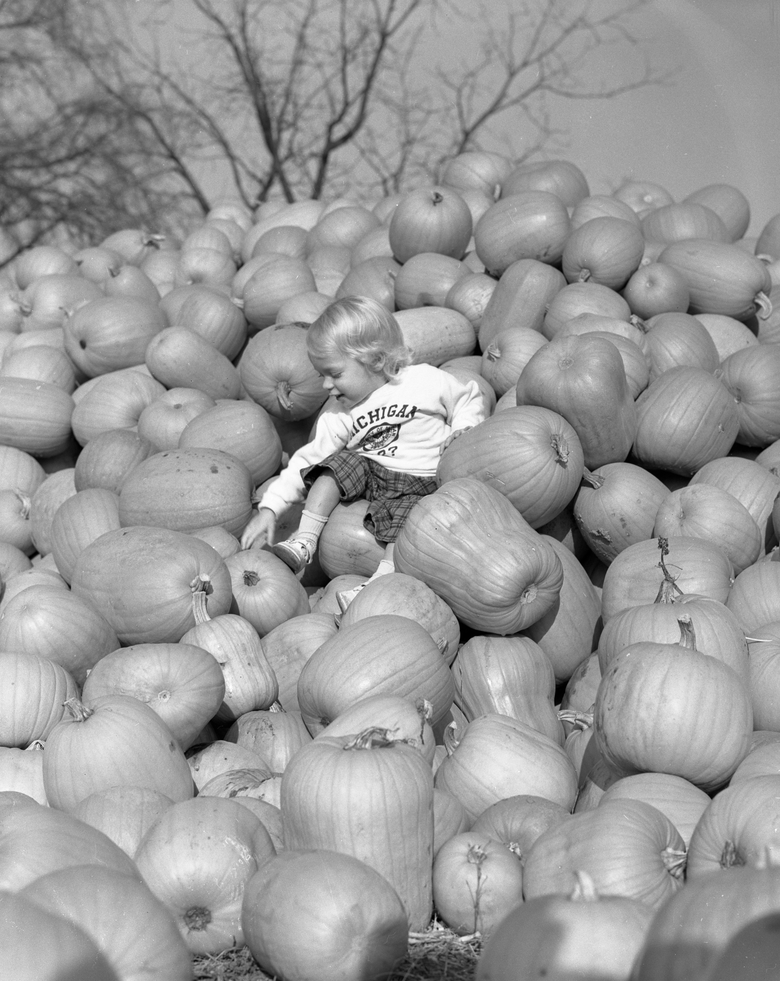 Danielle Galbraith on a pile of pumpkins, October 1956 image