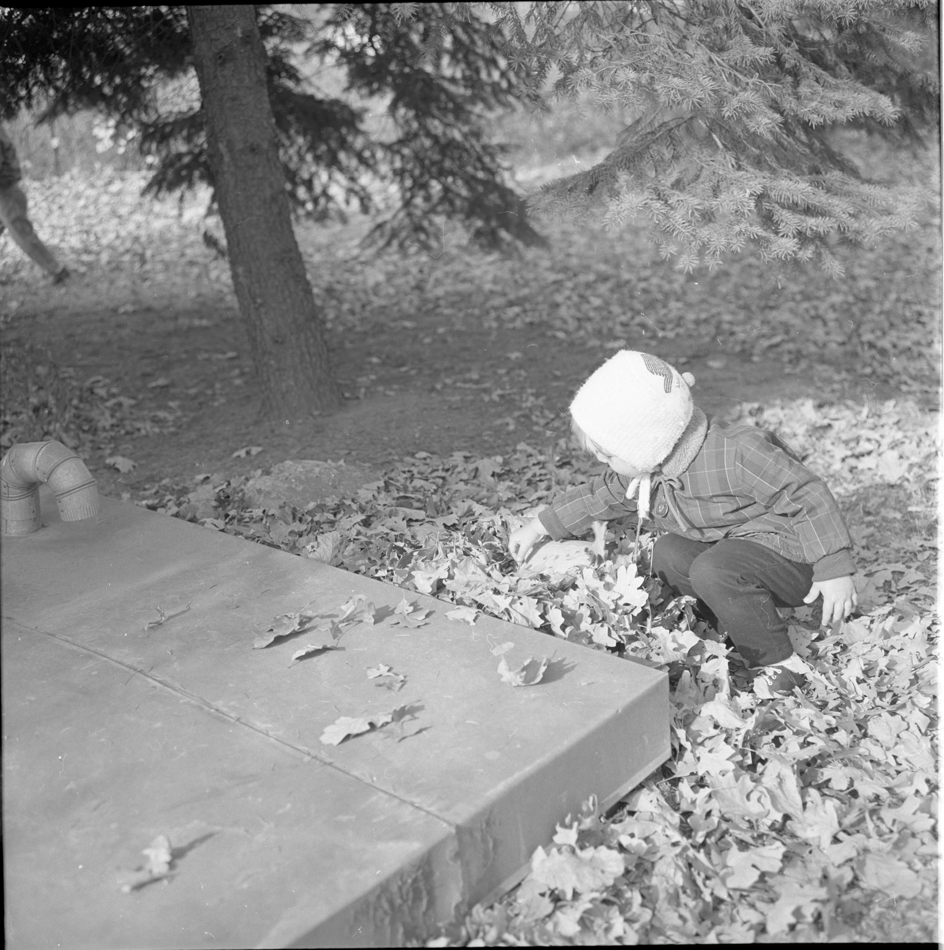 Ann Arbor Co-operative Nursery School Annual Pumpkin Hunt, October 1963 image