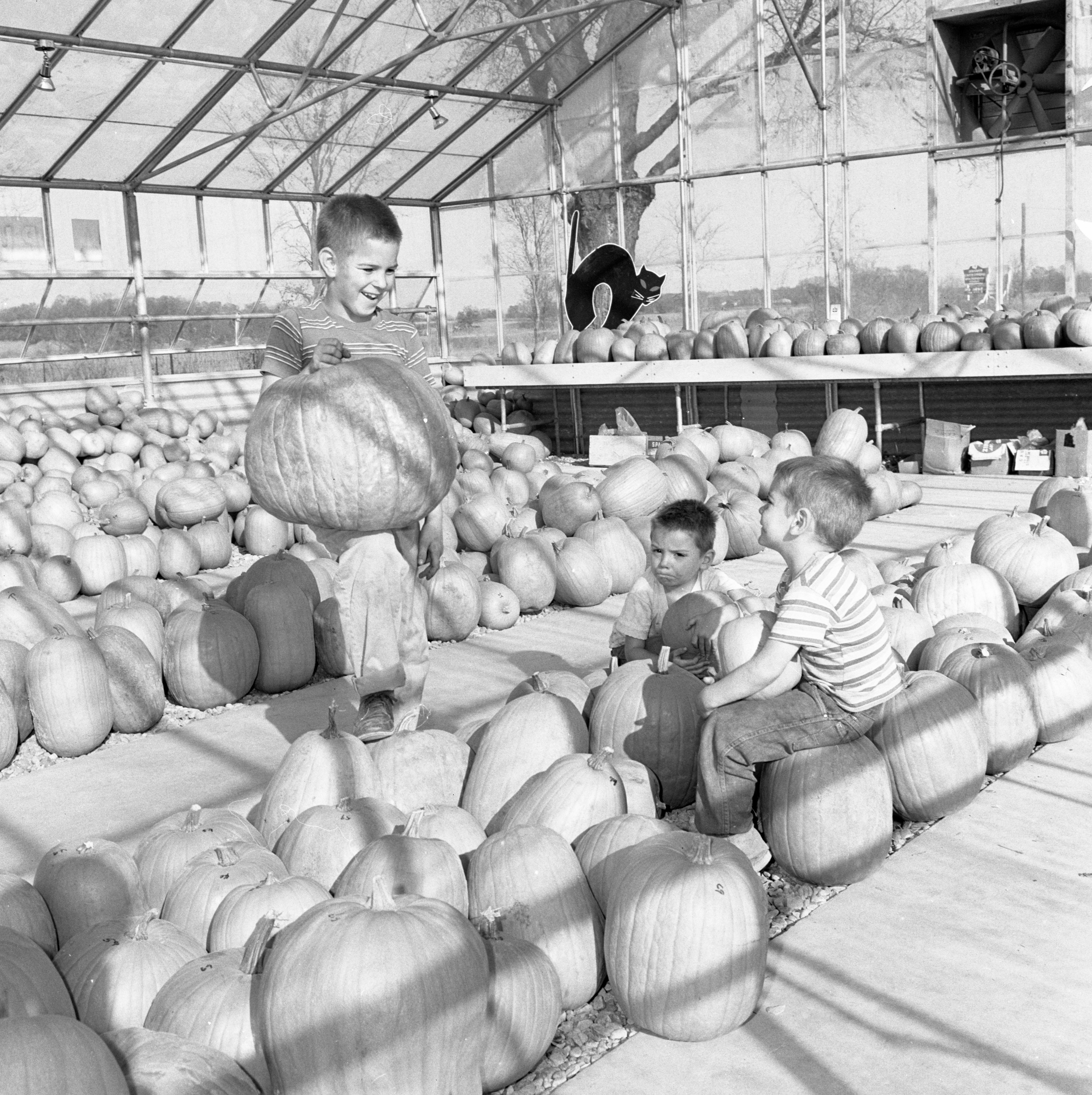 Children Shopping For Halloween Pumpkins, October 1963 image