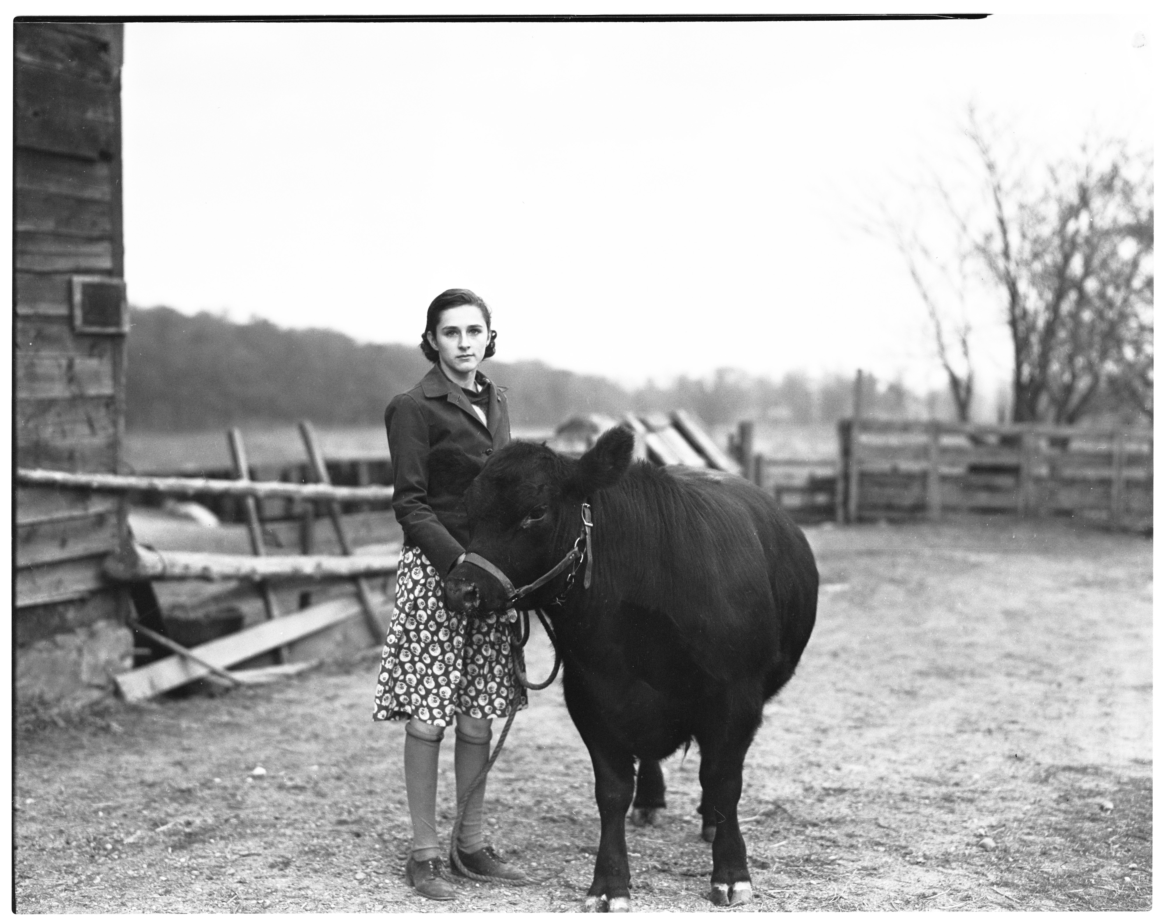 Mary Lesser & Aberdeen Angus Steer, November 1936 image