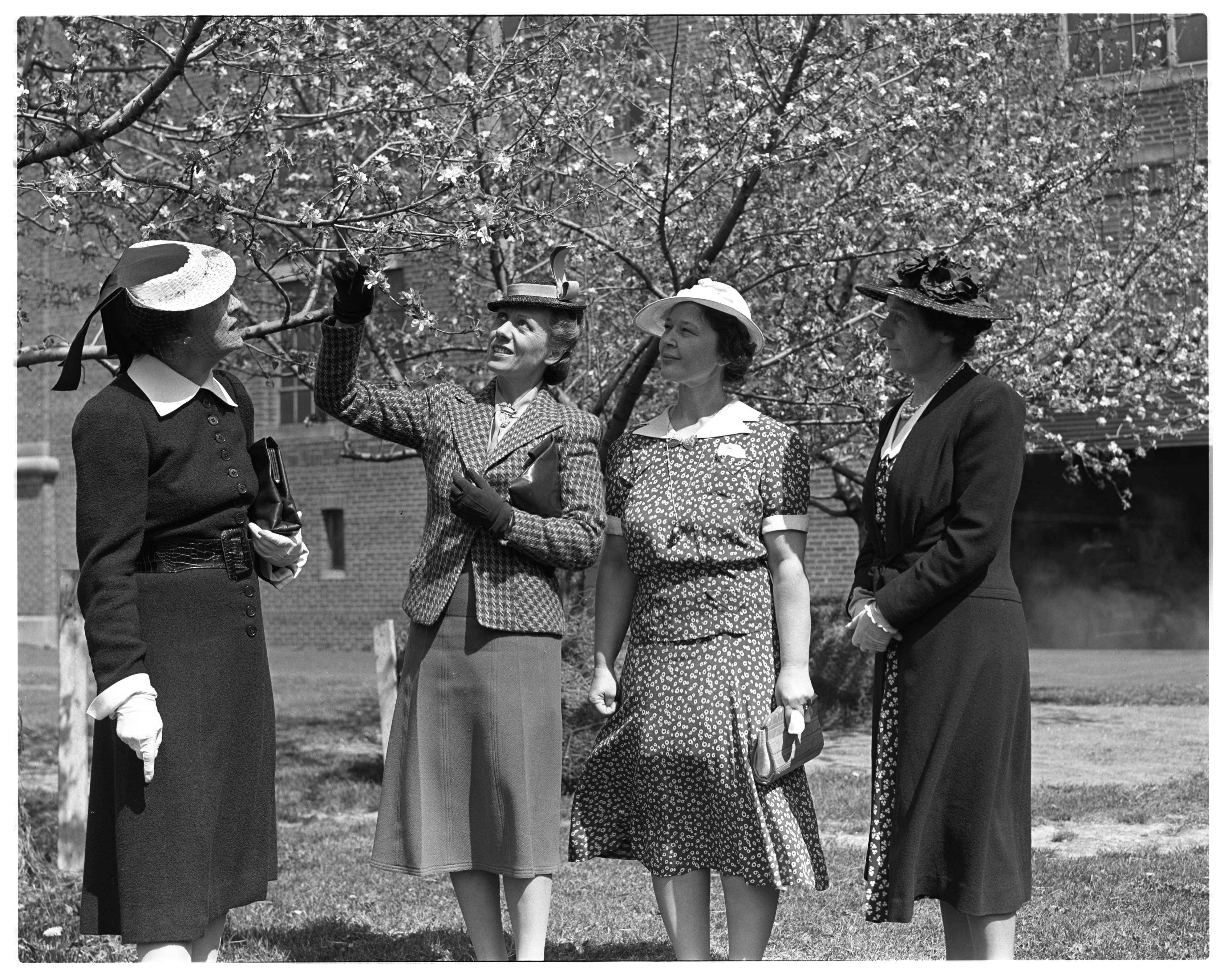 Ann Arbor Garden Club Members with Apple Blossoms image
